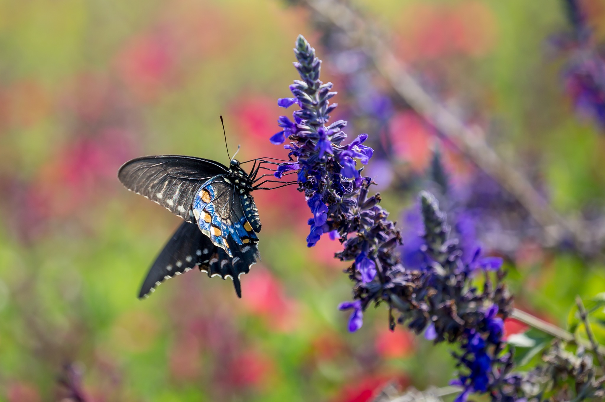 Butterfly 2 by Robert White