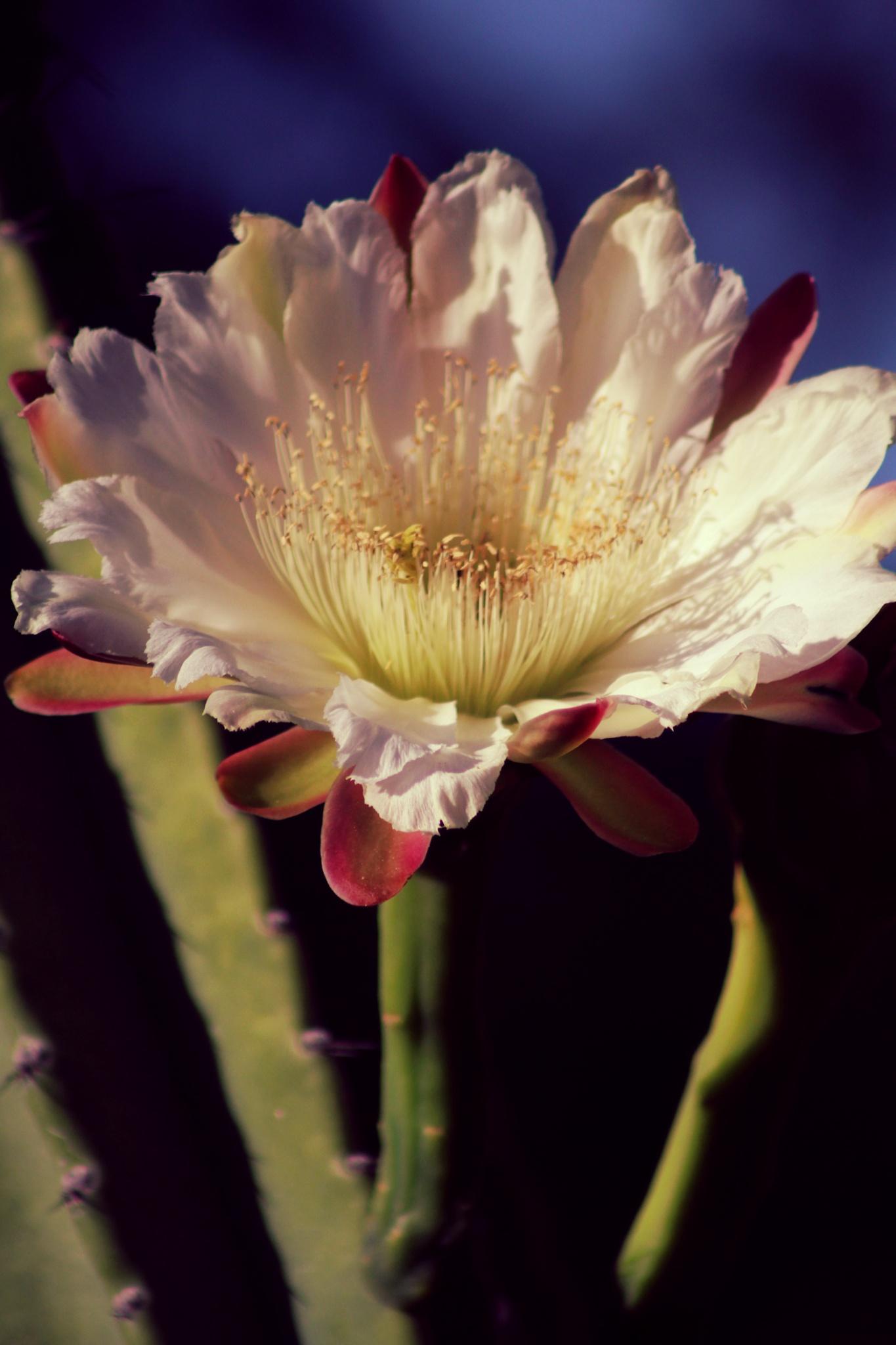 Blooming Up by Tina Shragal
