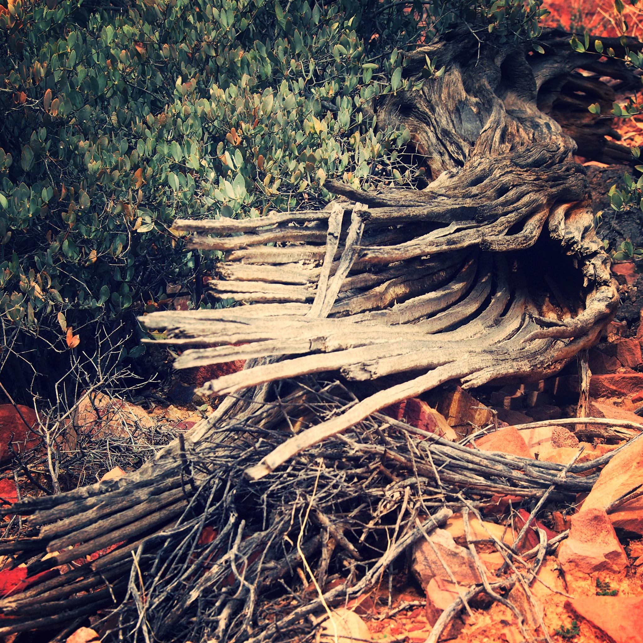 Death of a Cactus by Tina Shragal