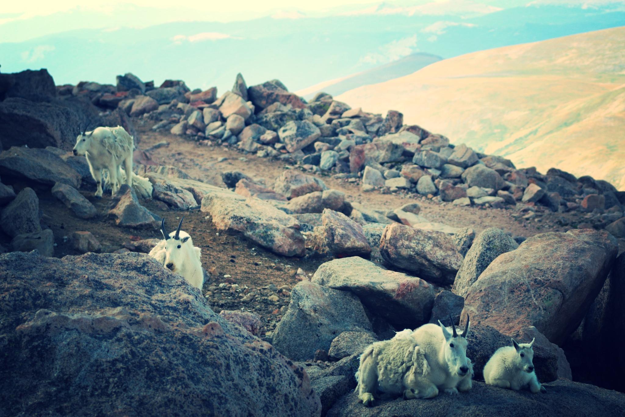 Life on the Rocks by Tina Shragal