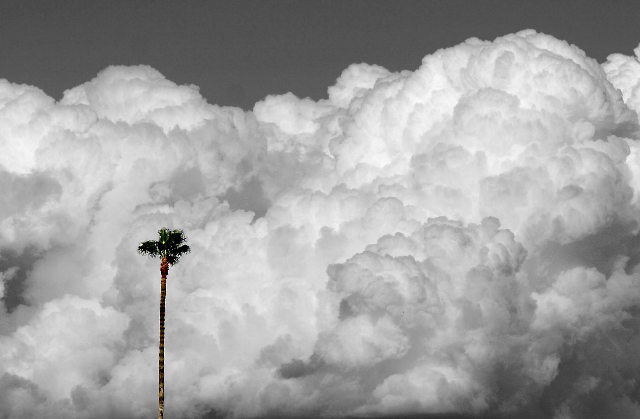 Lone Desert Palm - Southern California by hr411design