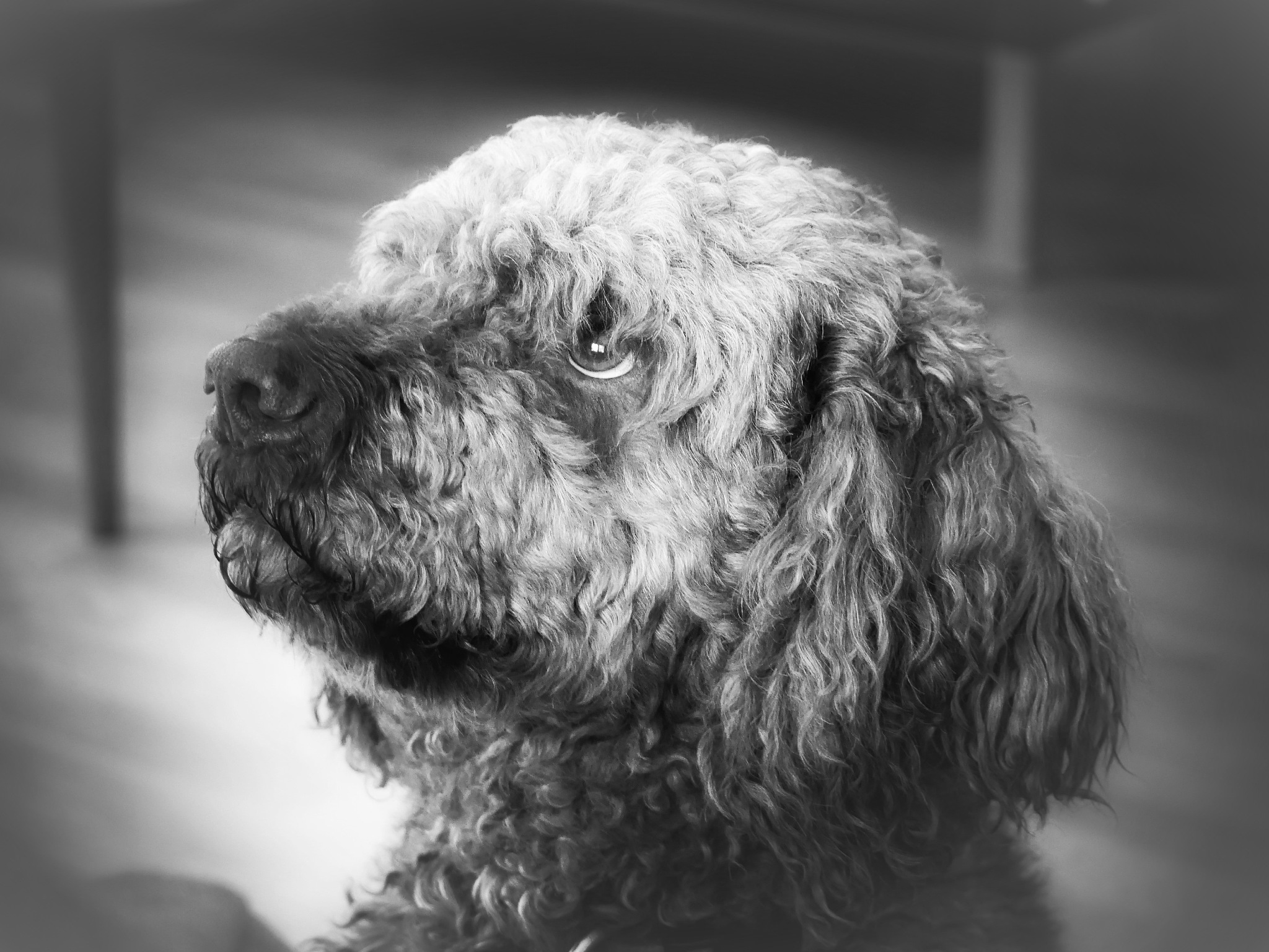 Dante the italian dog! by Cicki Jarneberg