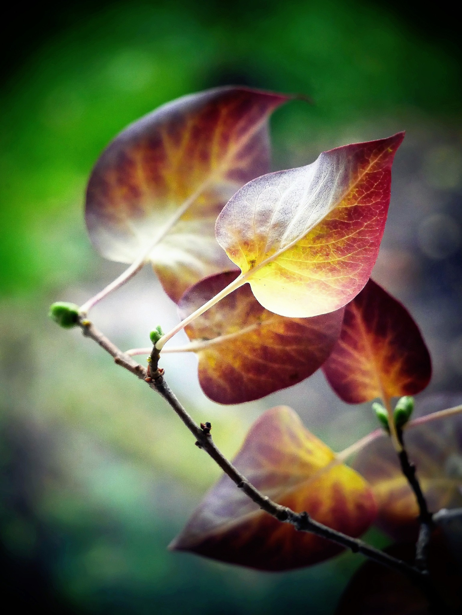 Another autumn pic today! by Cicki Jarneberg