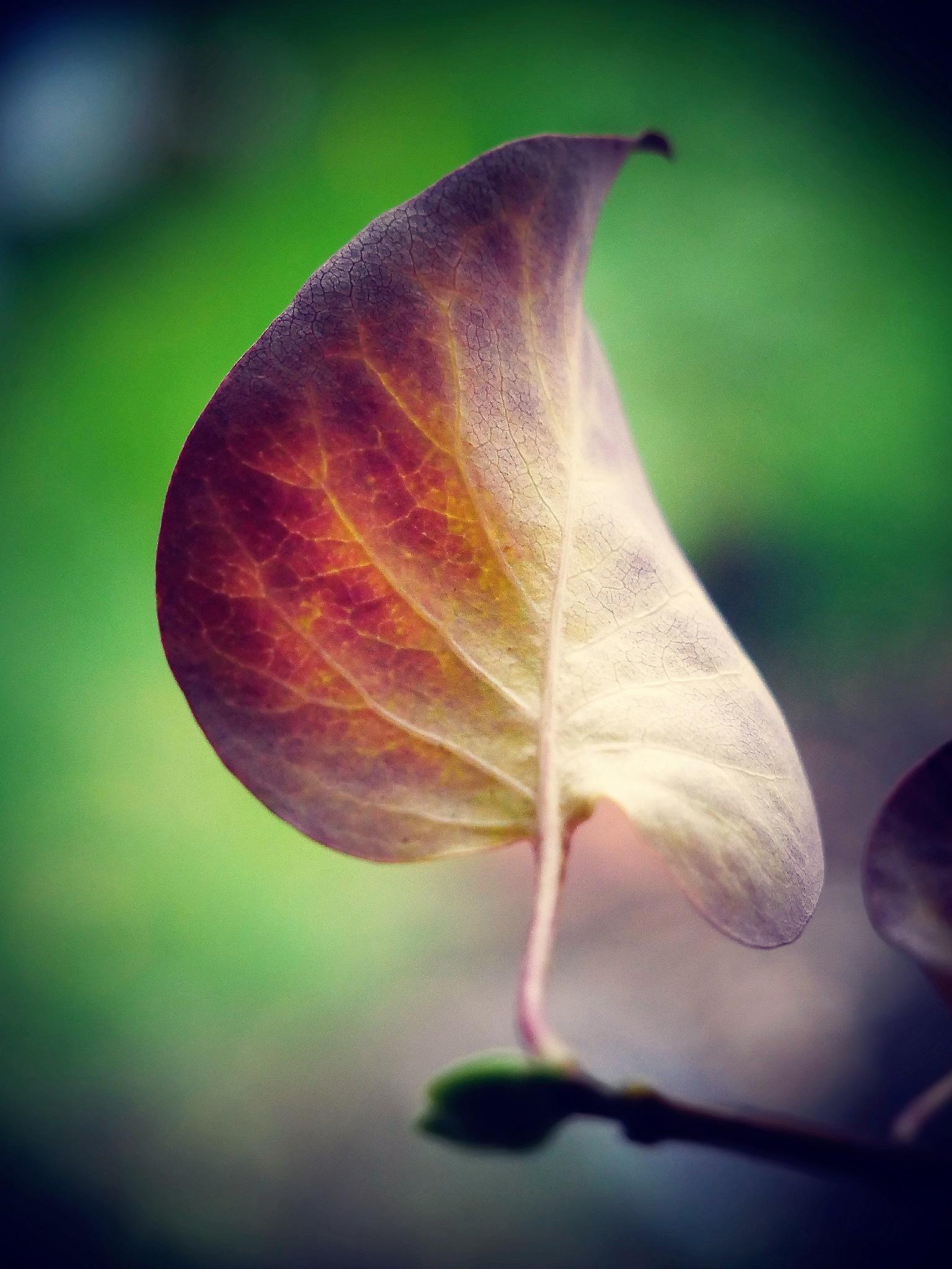 Autumn leaf! by Cicki Jarneberg