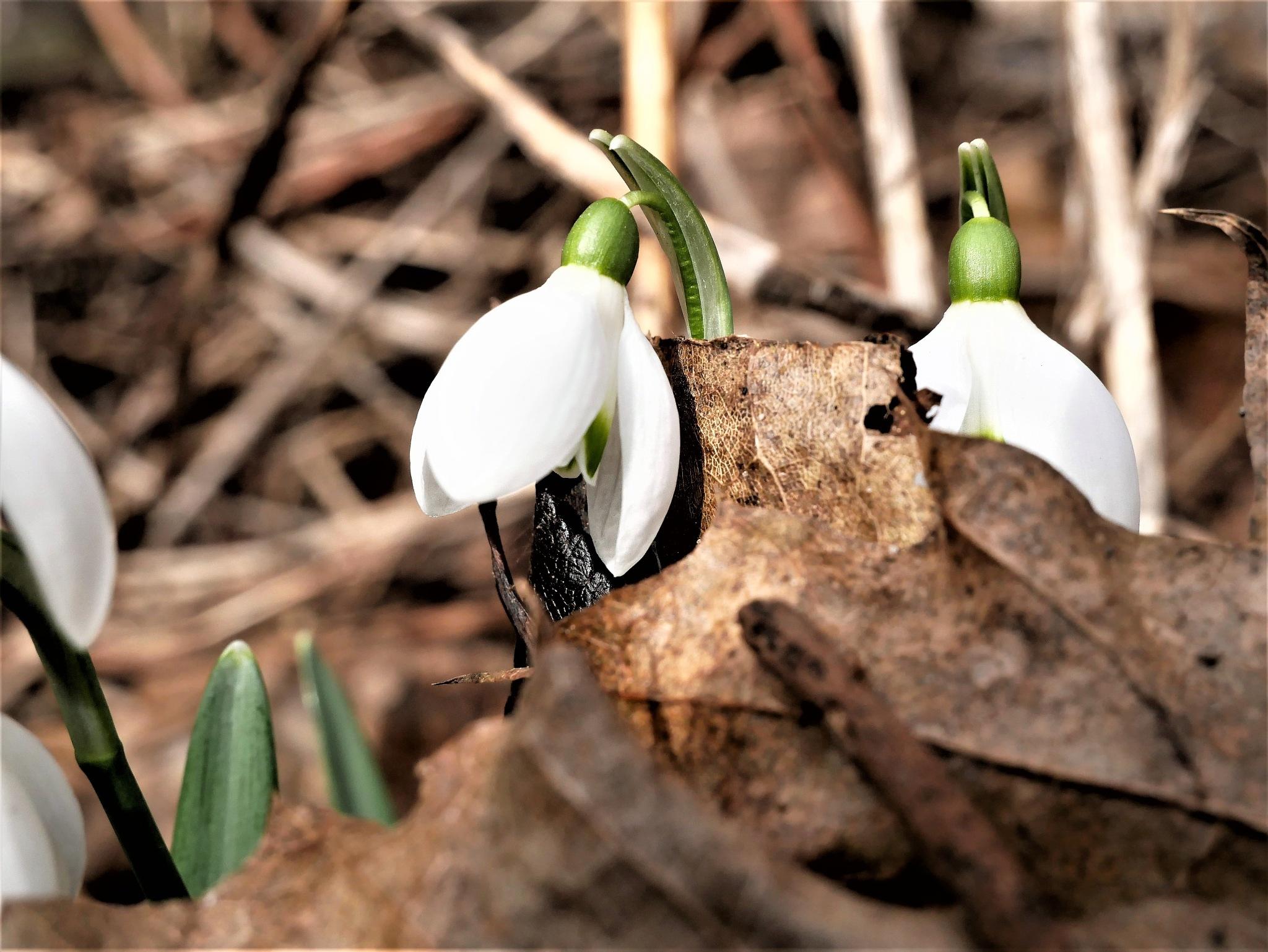Våren är på väg upp!! by Cicki Jarneberg