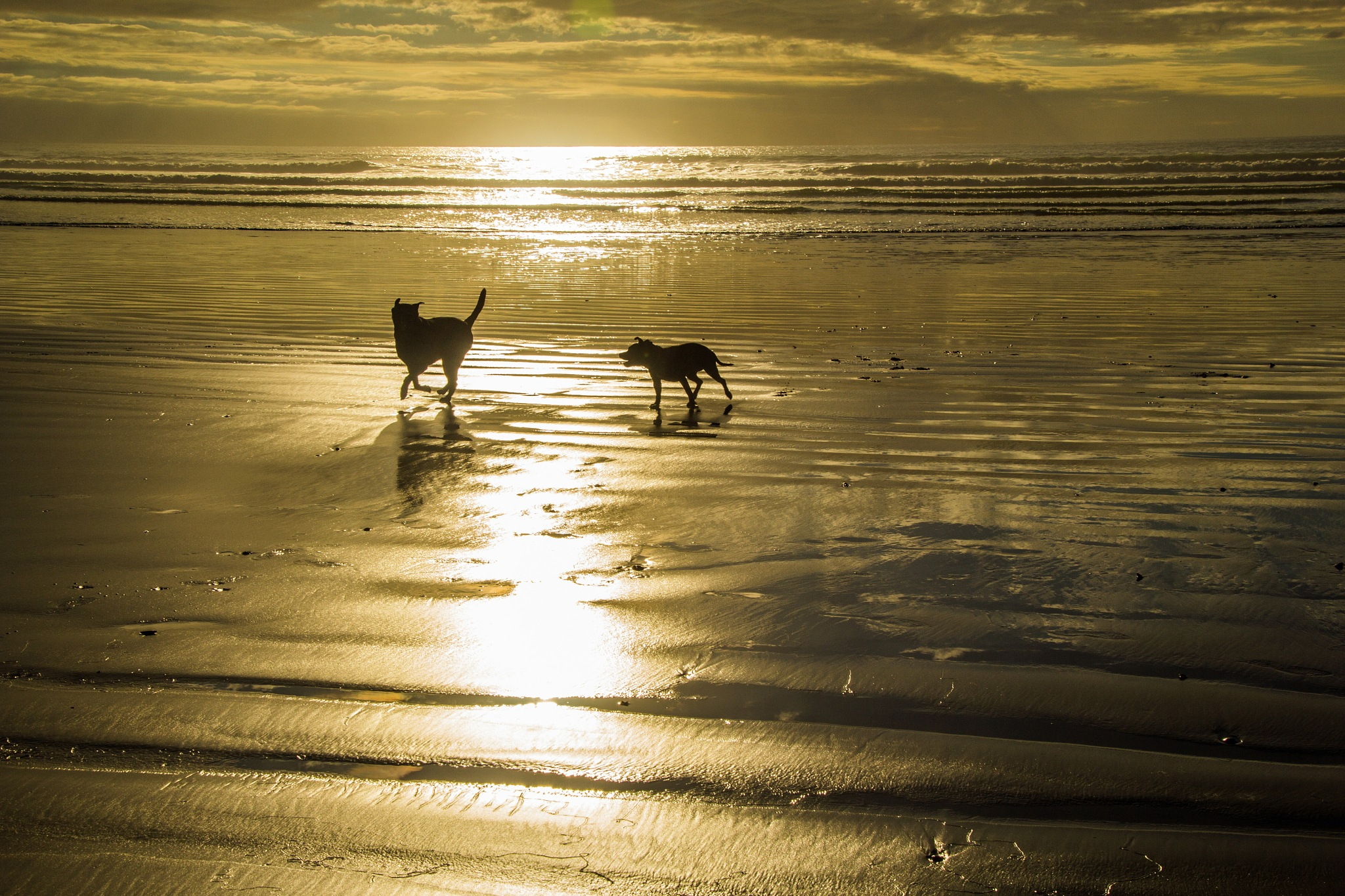 Playing on the beach by Nauta Piscatorque
