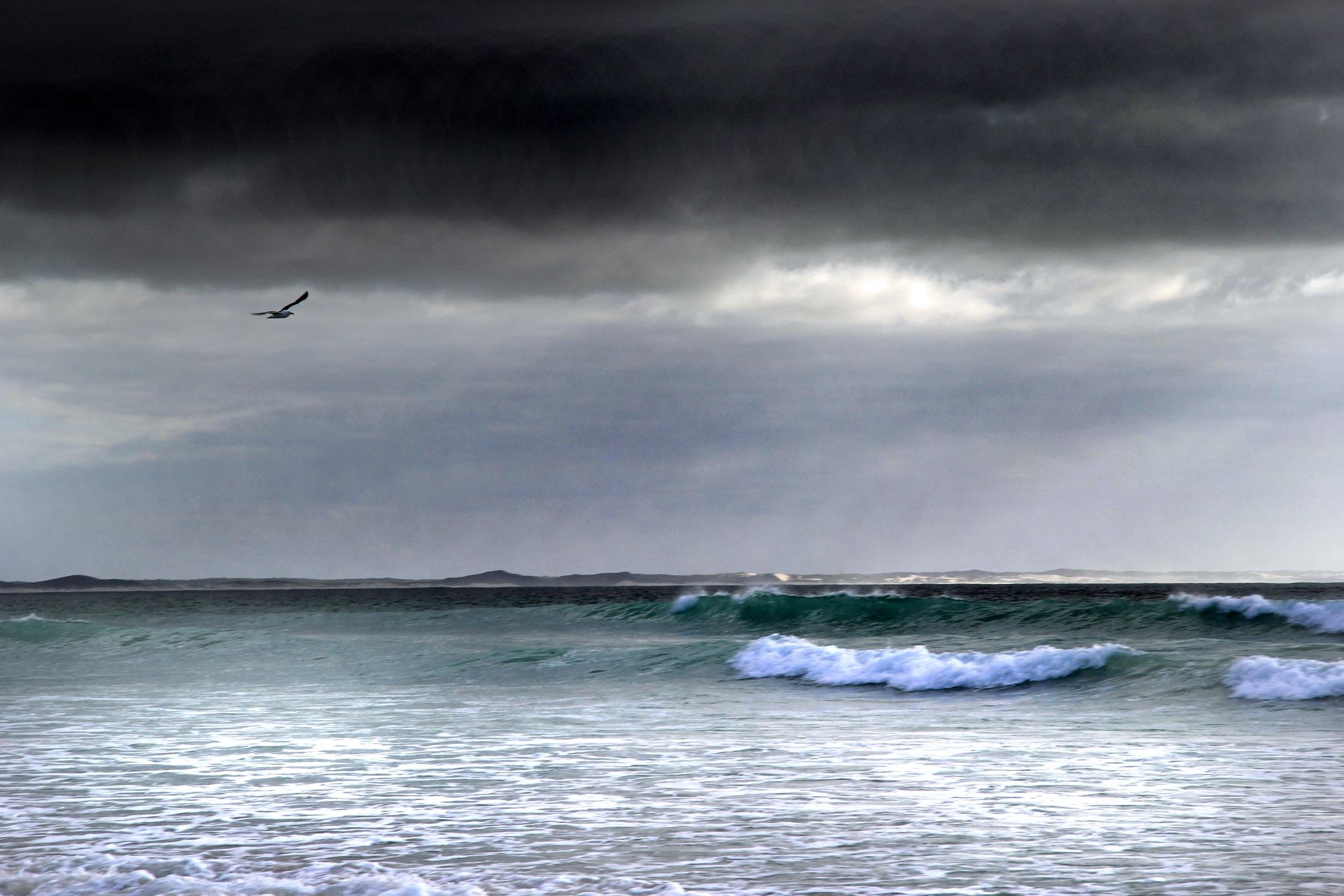 Seagull in flight by Nauta Piscatorque
