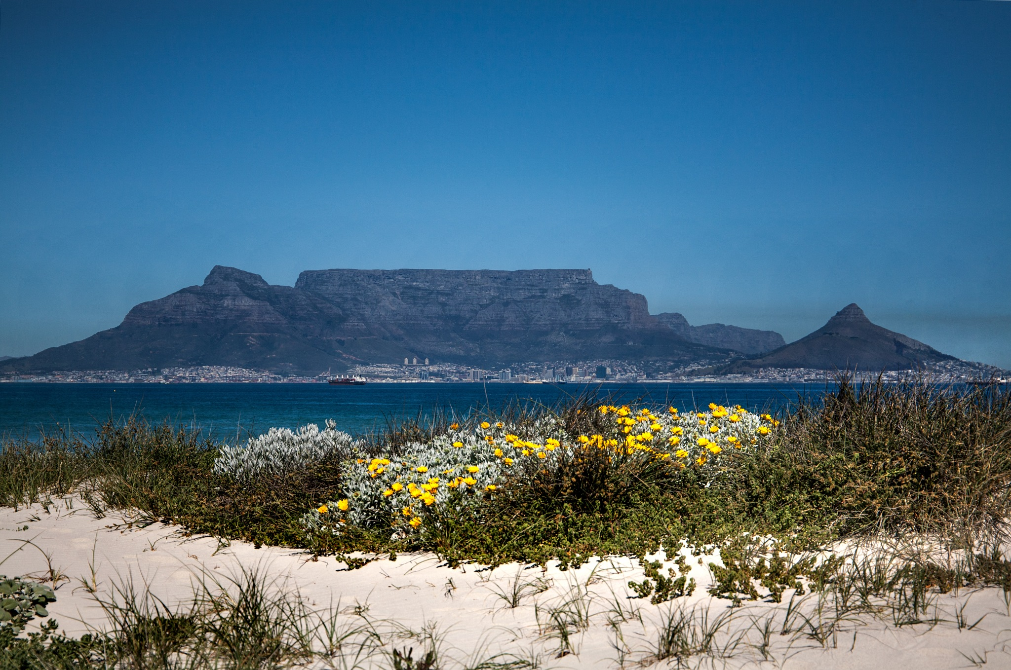 Spring, with love from Cape Town by Nauta Piscatorque