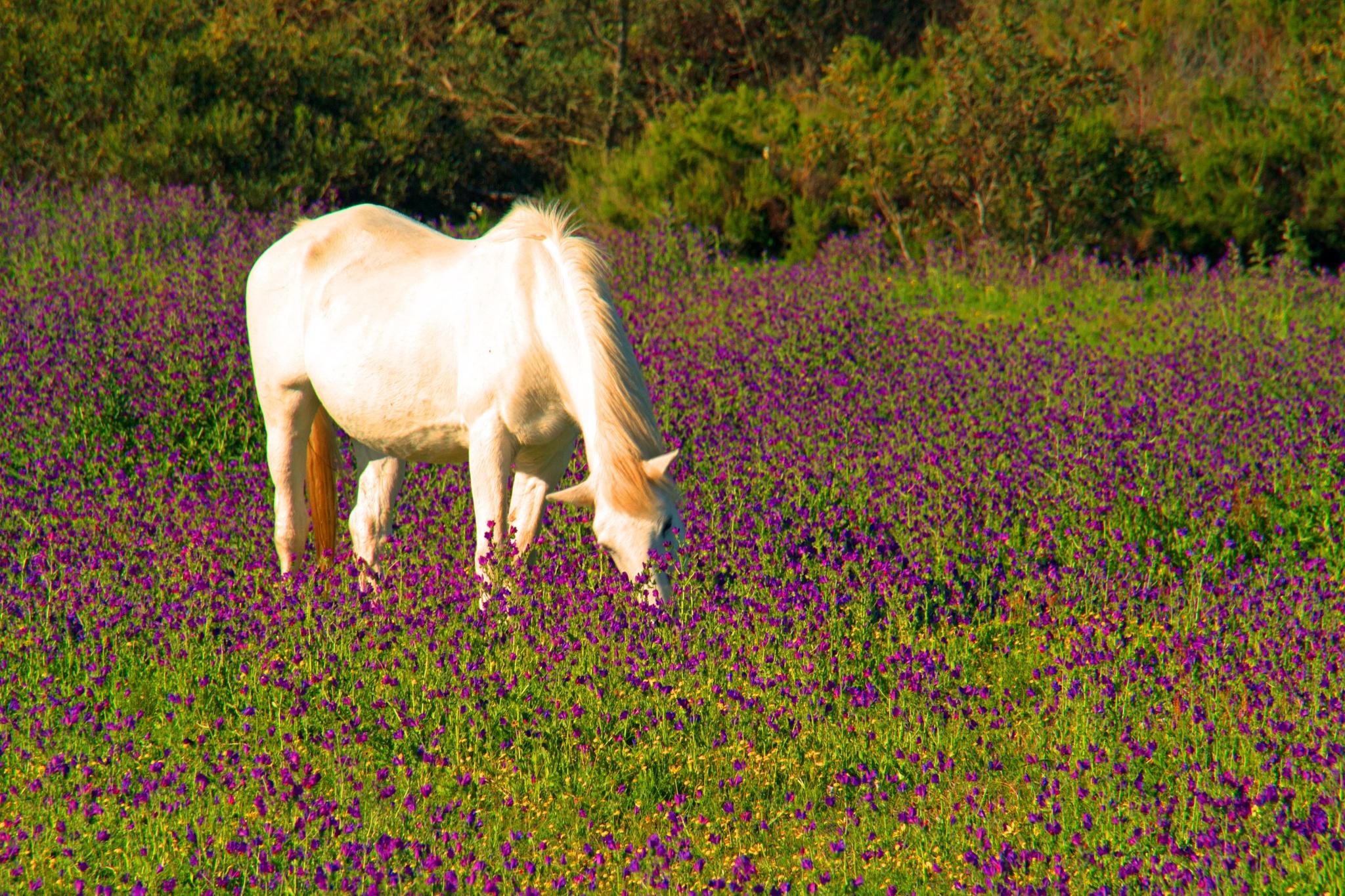 Horse amongst flowers by Nauta Piscatorque
