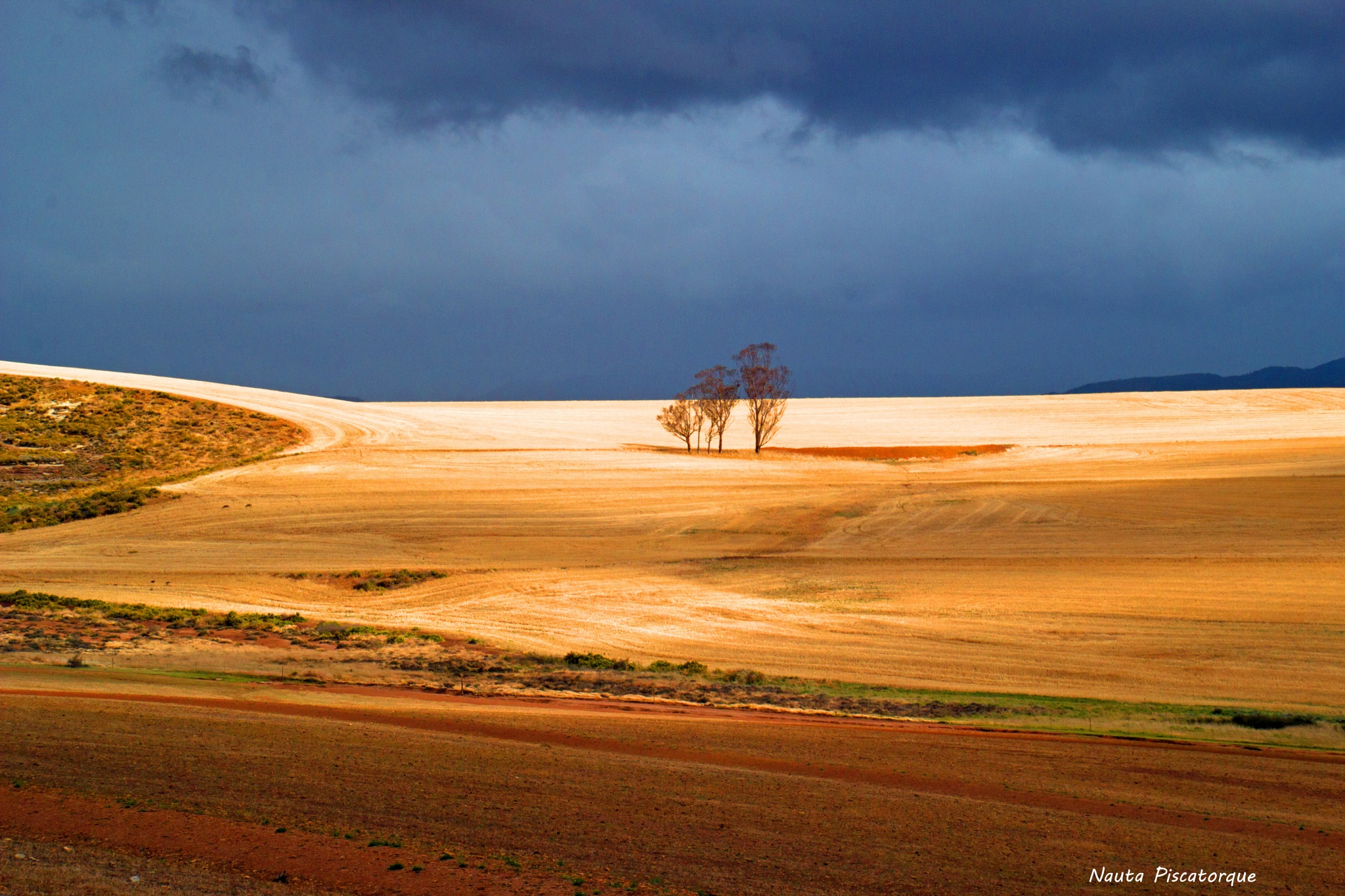 Trees in the Overberg by Nauta Piscatorque