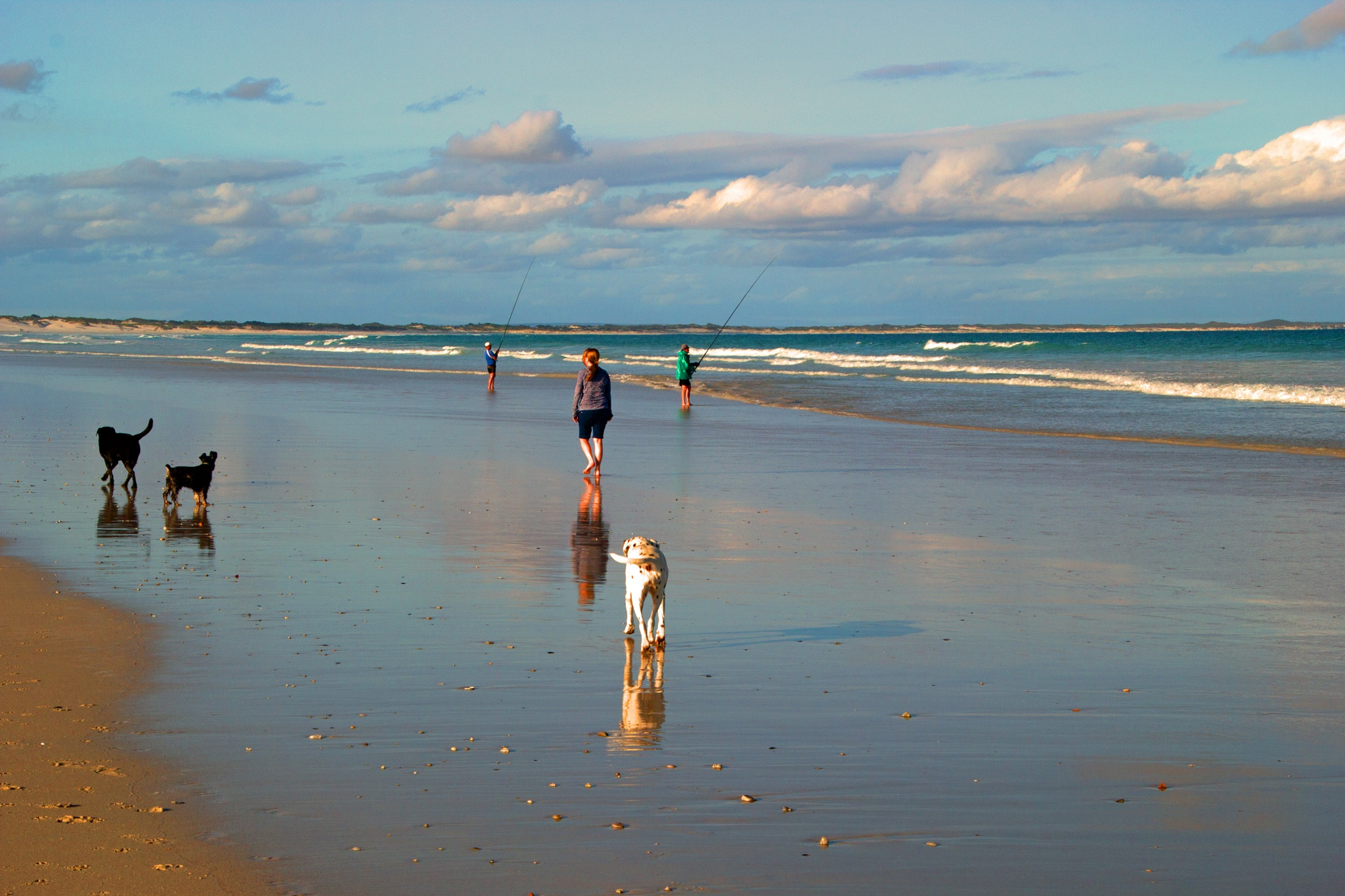 Walking the dogs by Nauta Piscatorque