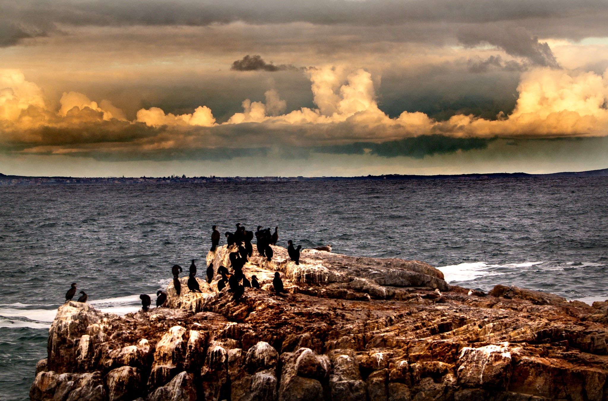 Gannets on a rock by Nauta Piscatorque