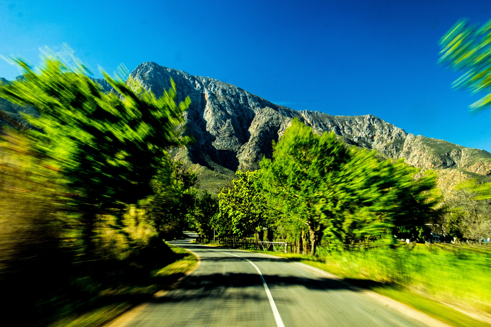 A lane of trees at speed by Nauta Piscatorque