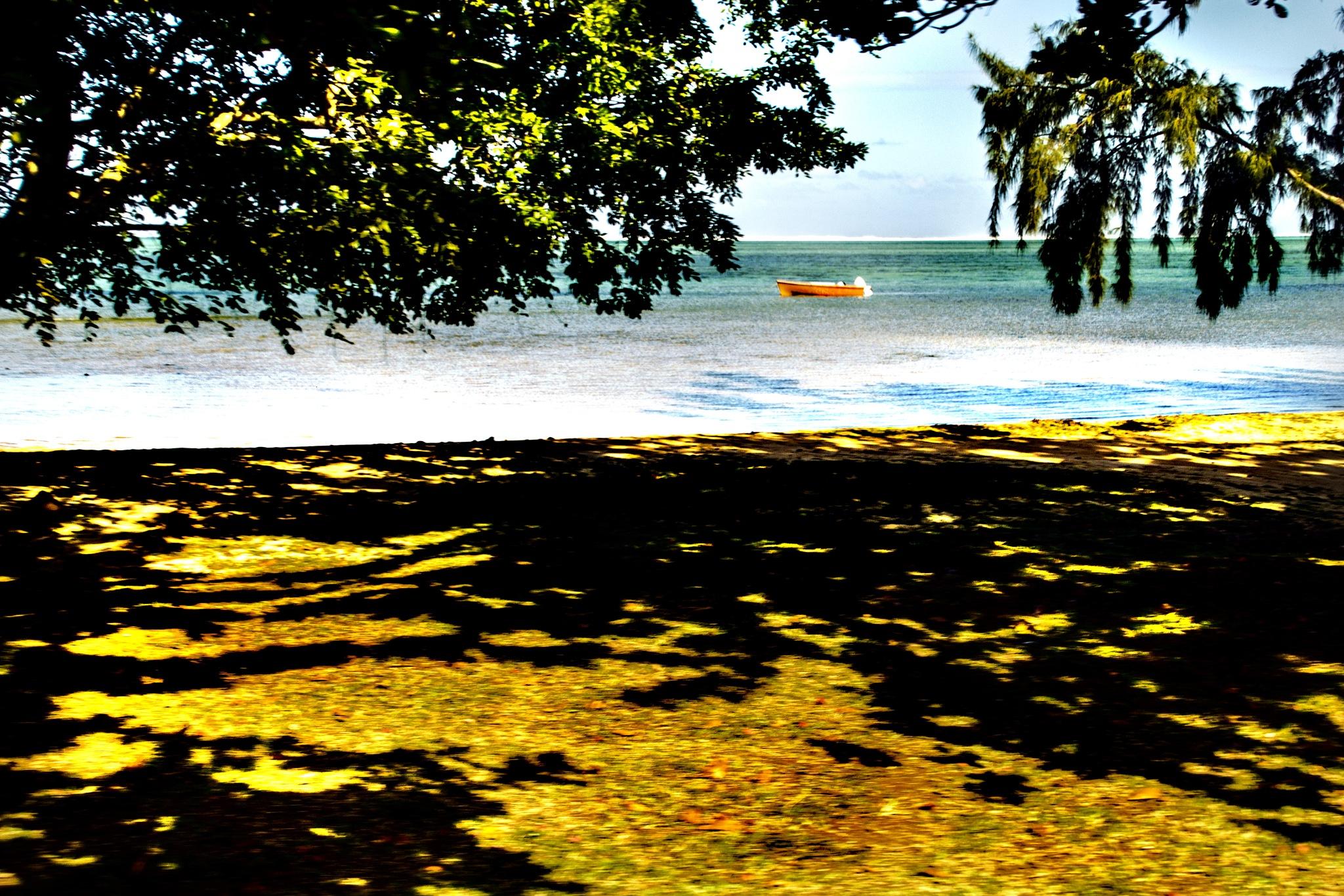 Little boat by Nauta Piscatorque