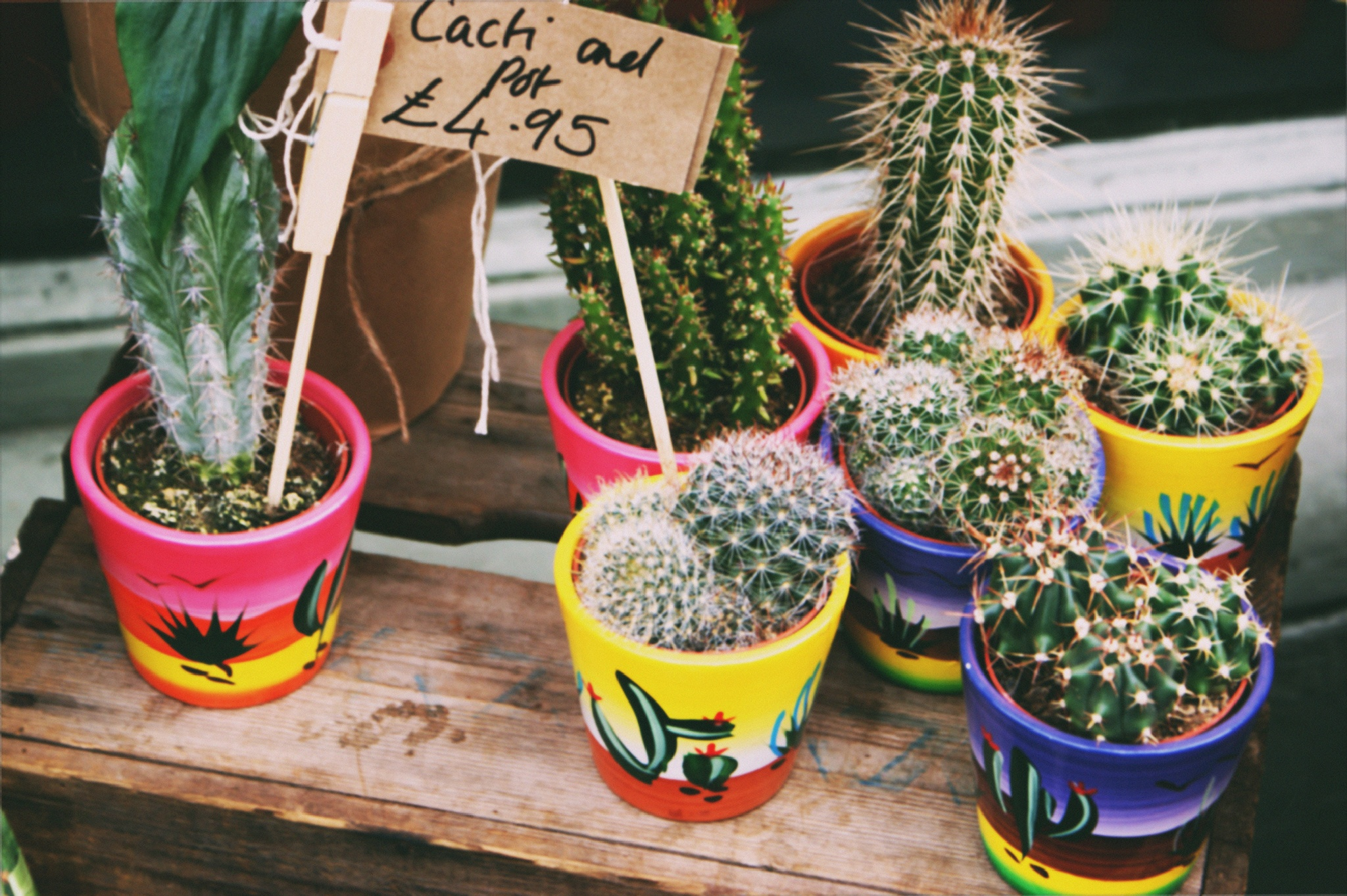 Cactus by Tashhaaaj