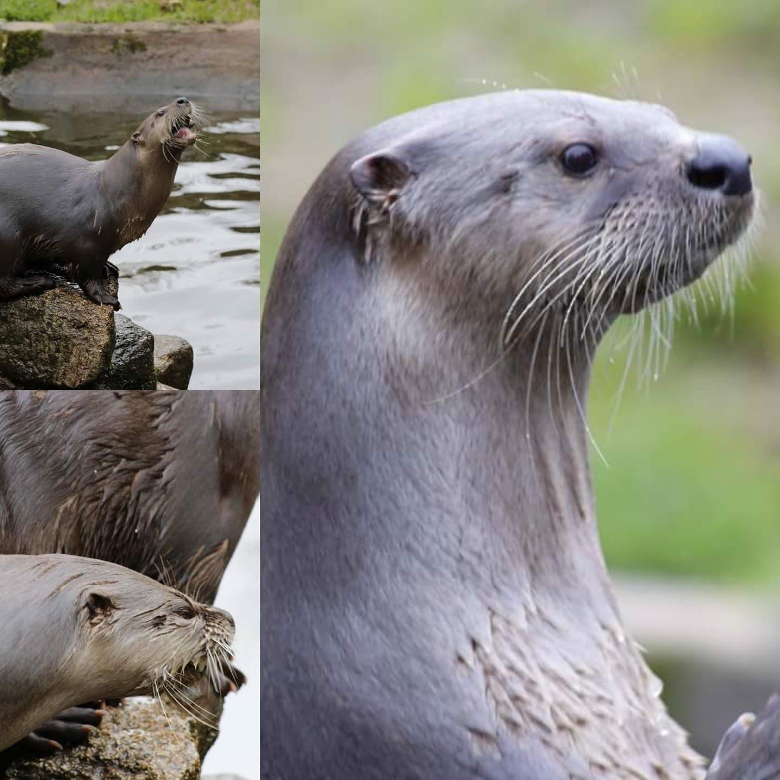 Otter by NeilWitton