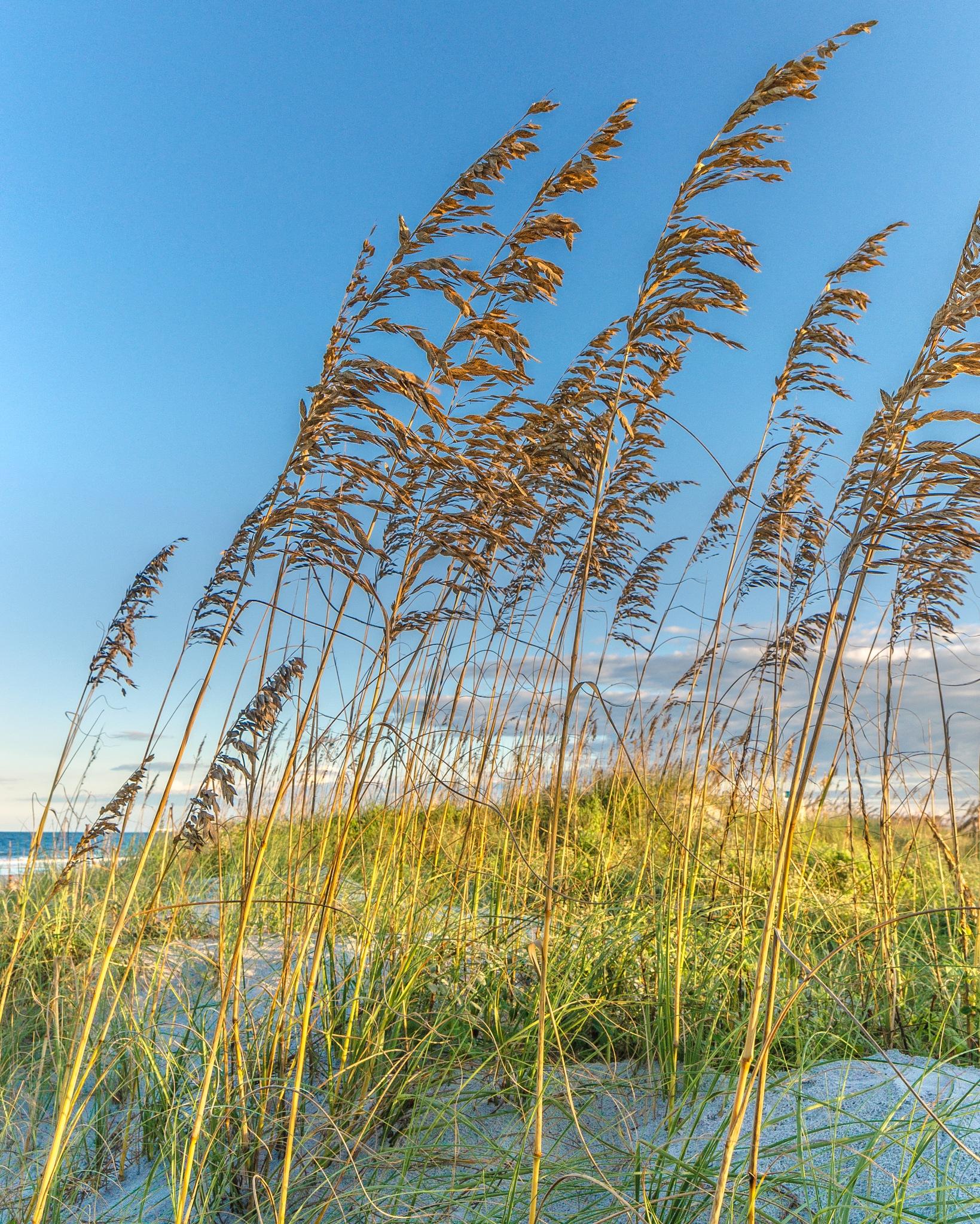 Fall in Florida by Steve Ducharme