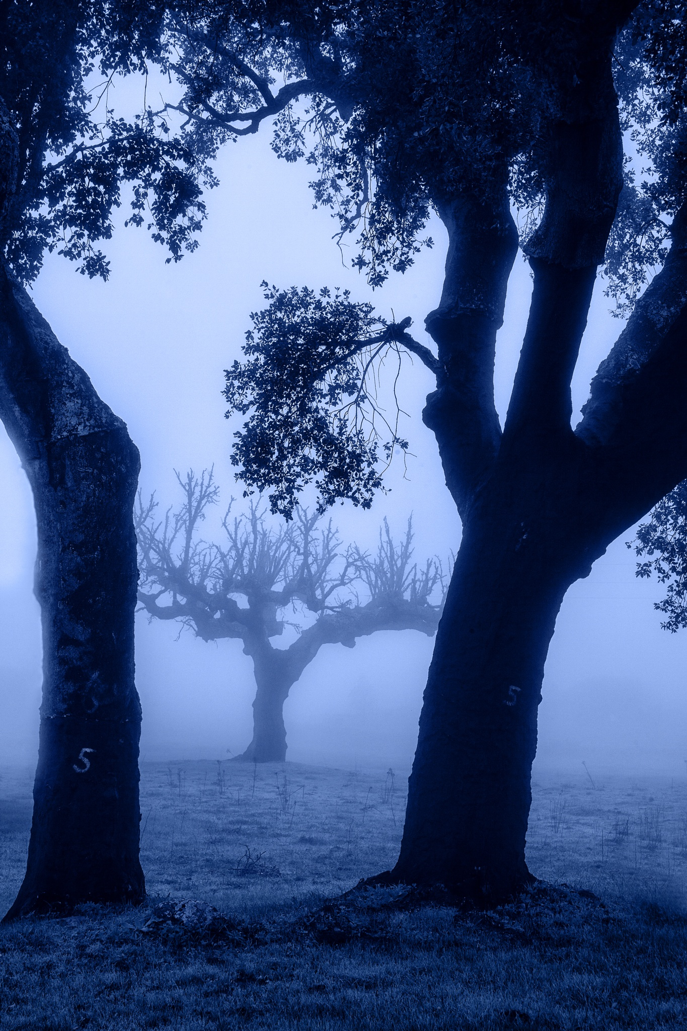 misty blues by melanie bund martins