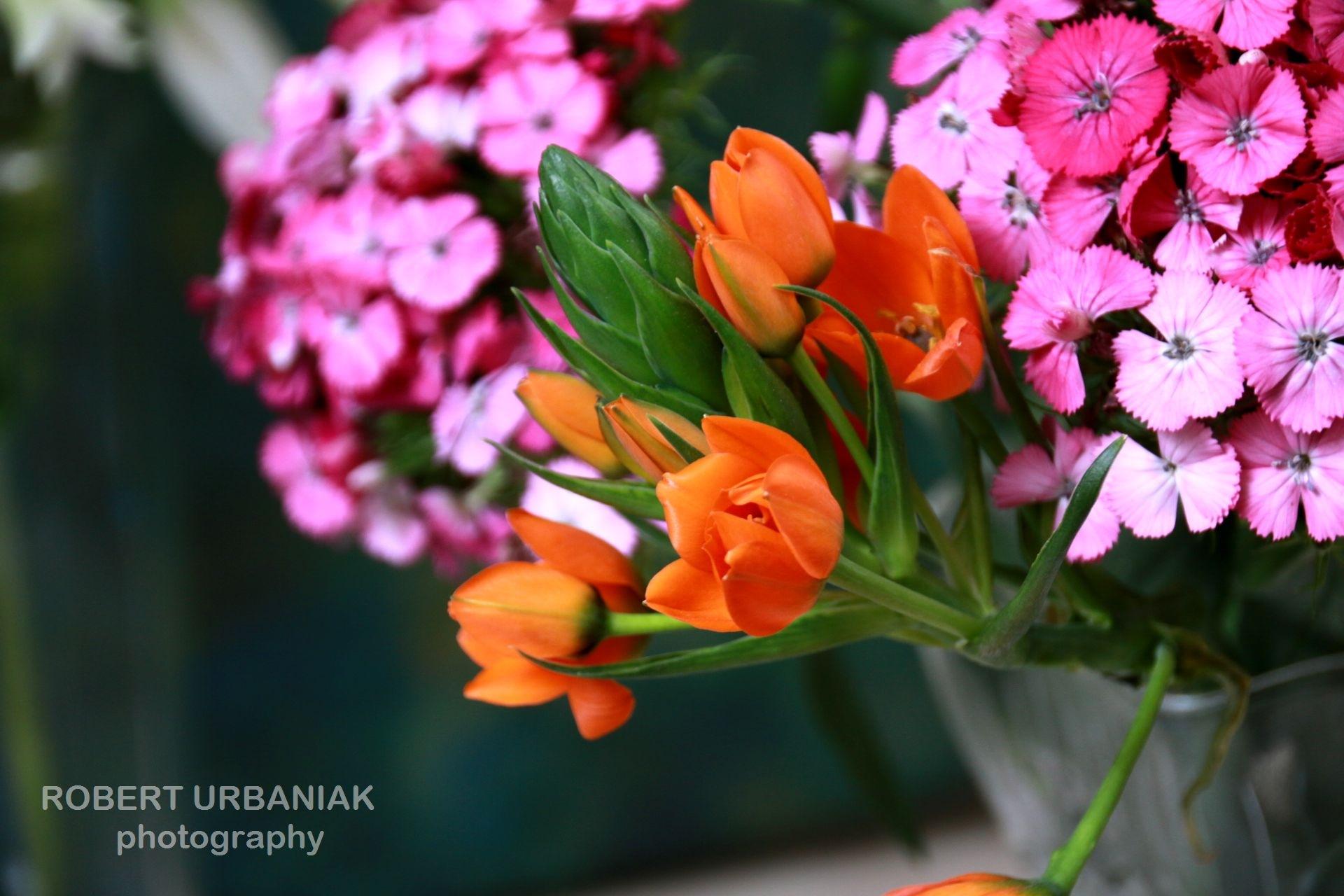 orange&green by Robert Urbaniak