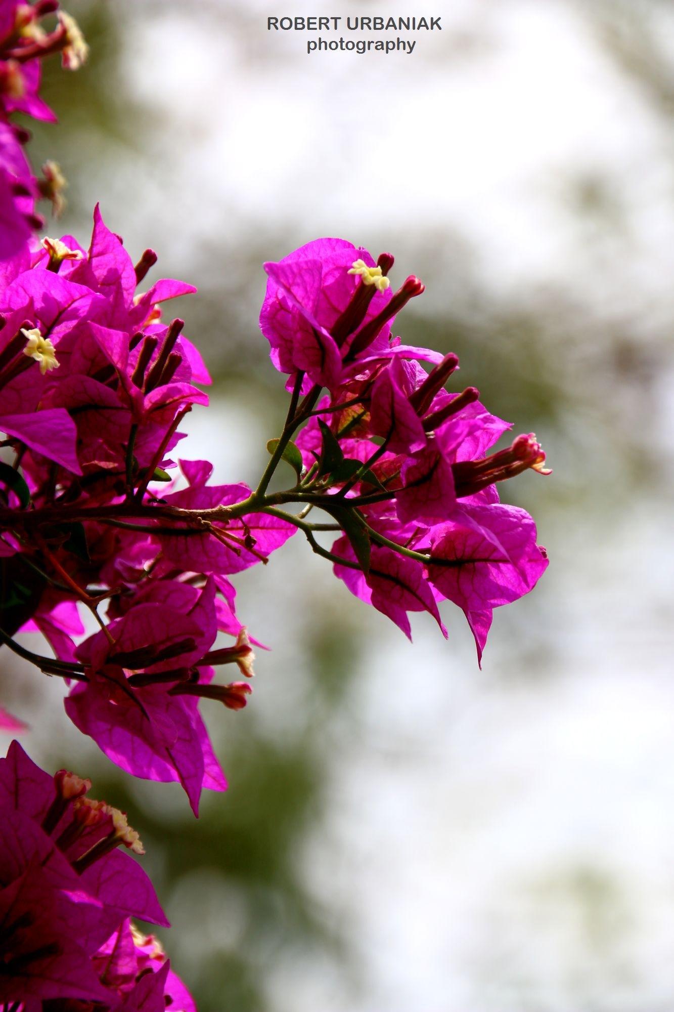 purple&white by Robert Urbaniak