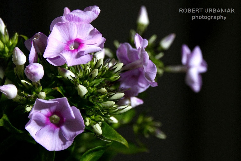 Purple&Green by Robert Urbaniak