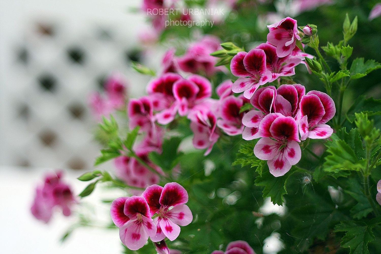 trio color flowers by Robert Urbaniak