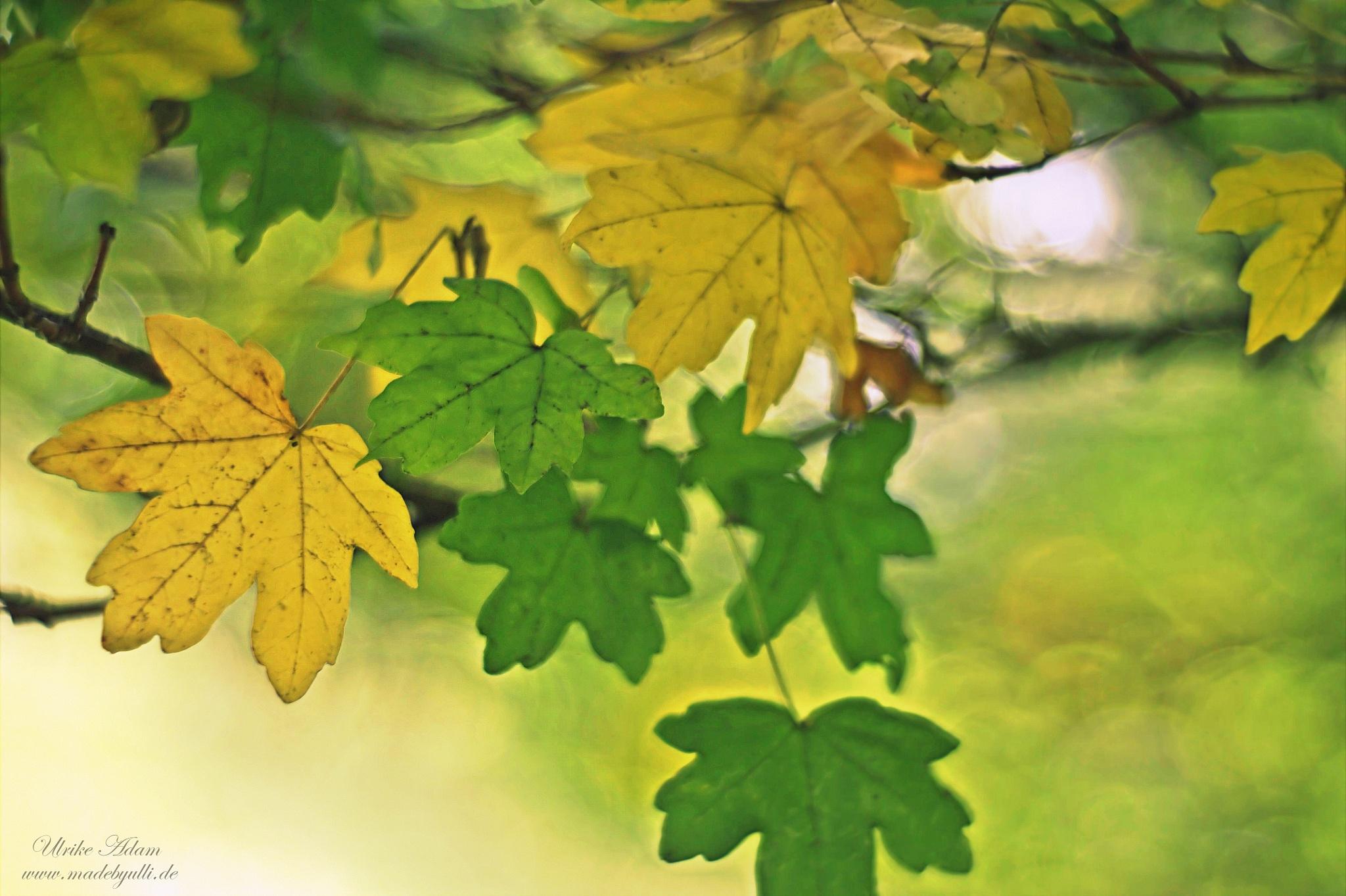 Herbststimmung by UlrikeAdam