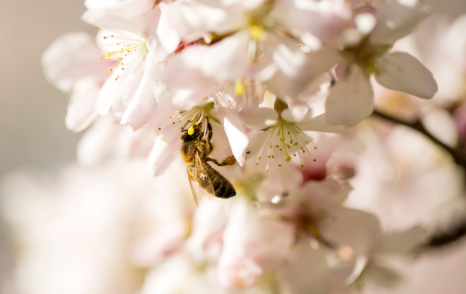 Even the Bees like Blossom by JaneCampbell21
