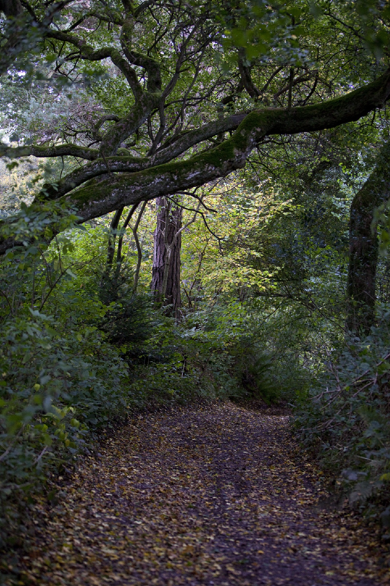 A Country Walk Path - The Pilgrims' Way by JaneCampbell21