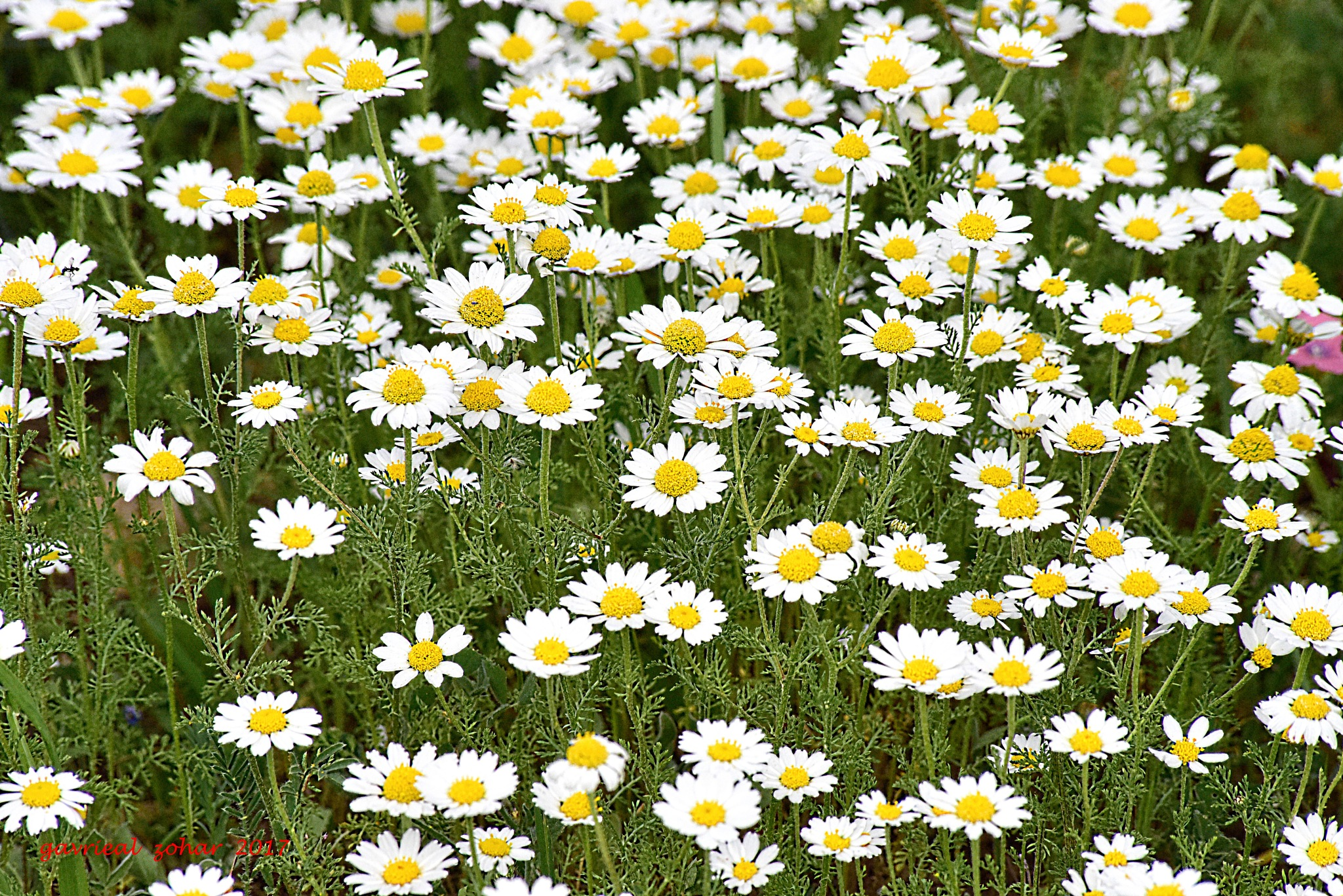 white and yellow carpet by gavriealzohar