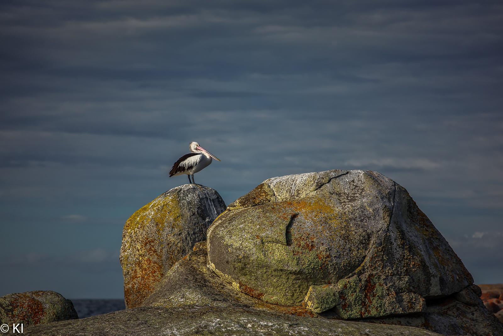 Photo in Animal #bird #pelican #rocks #sky #colours
