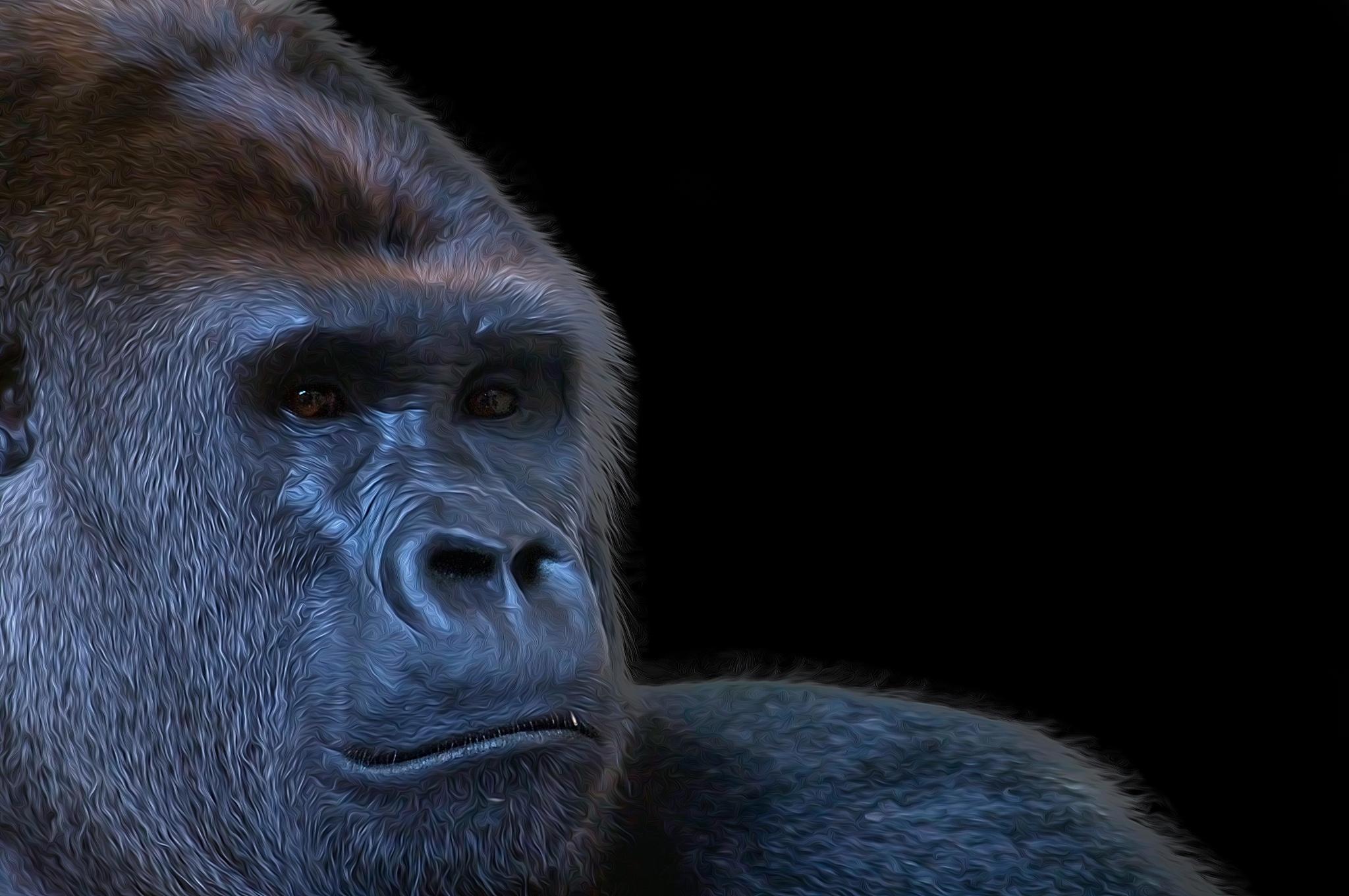 Gorilla by Mustafa Celebi