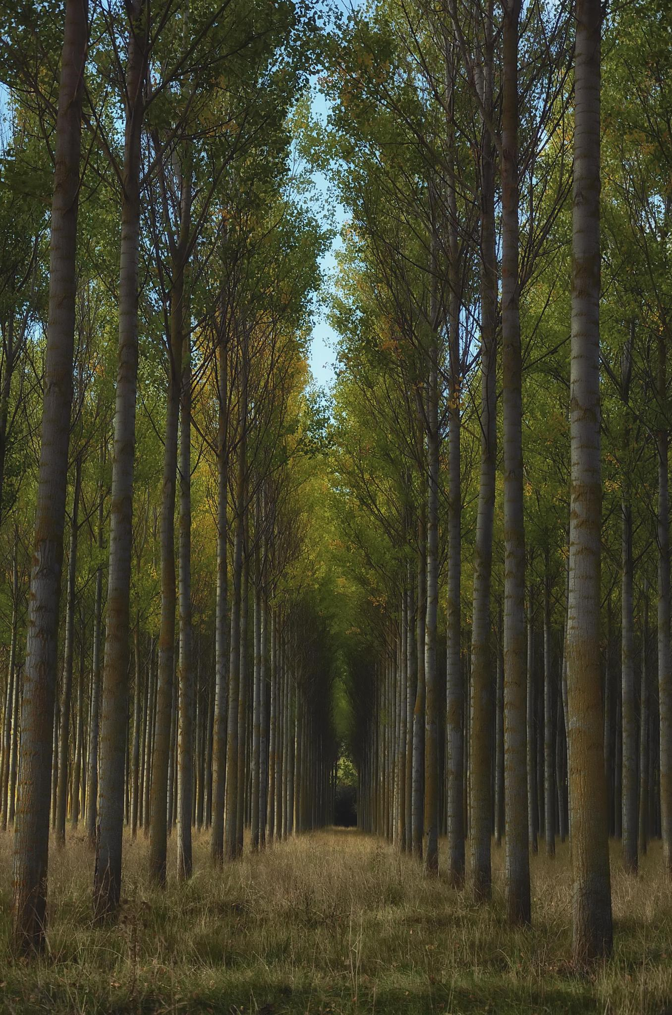 Magic trees by IsabelMaldonado
