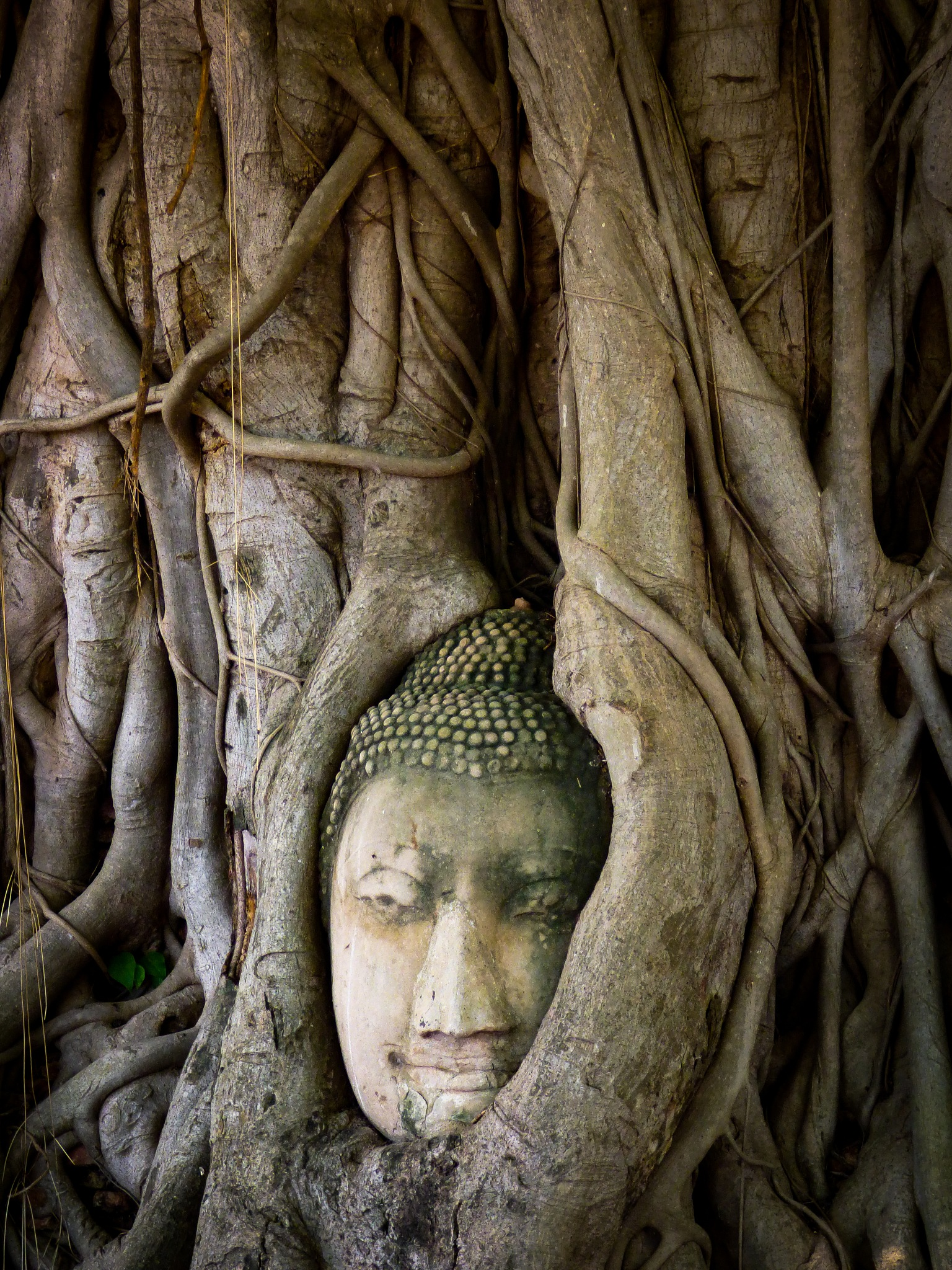 Buddha´s head in Tree roots by Roberto Justo Robiolo