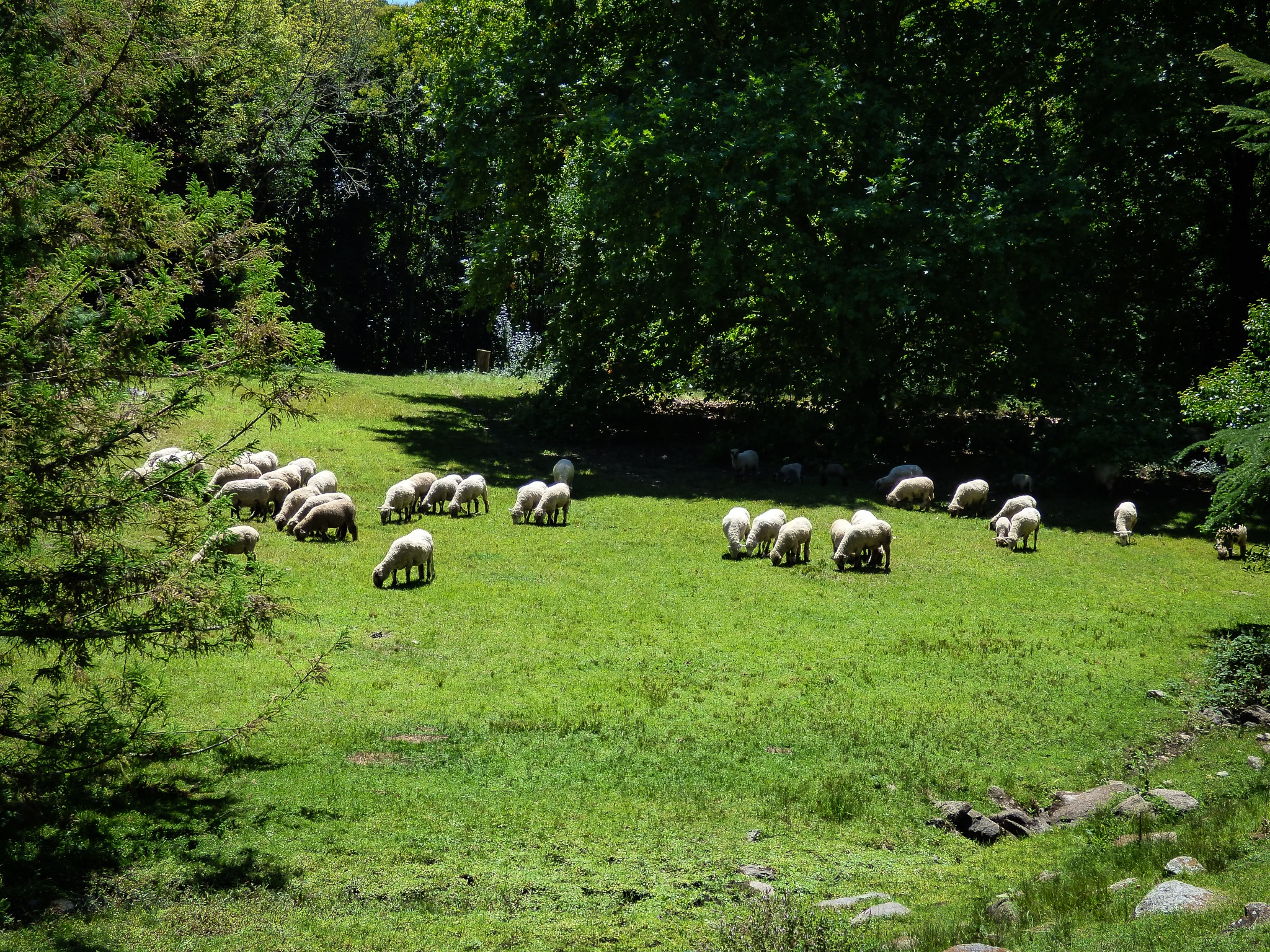 Sheep grazing by Roberto Justo Robiolo