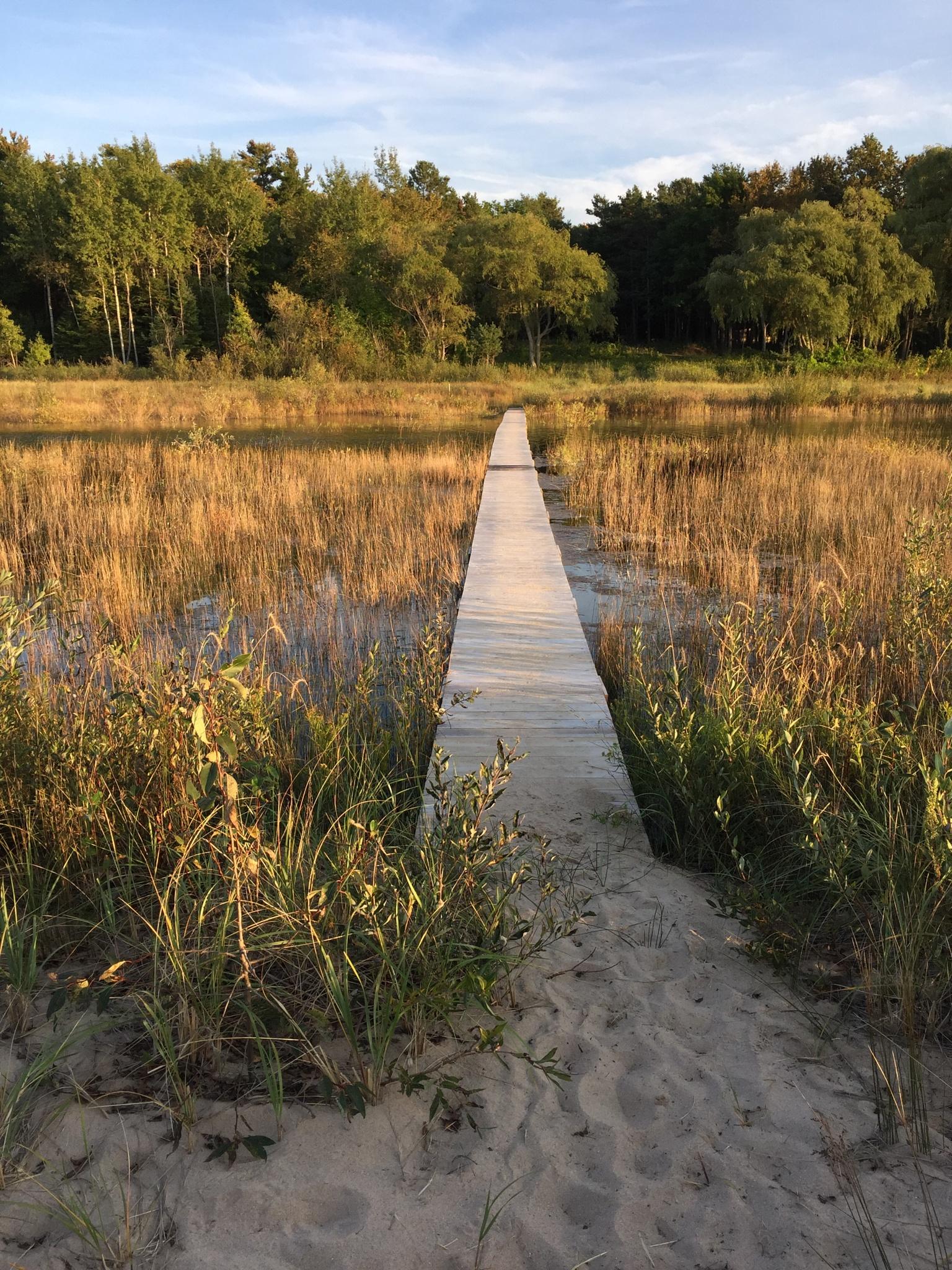 Walking the board walk in the marsh by laurabeammorche1