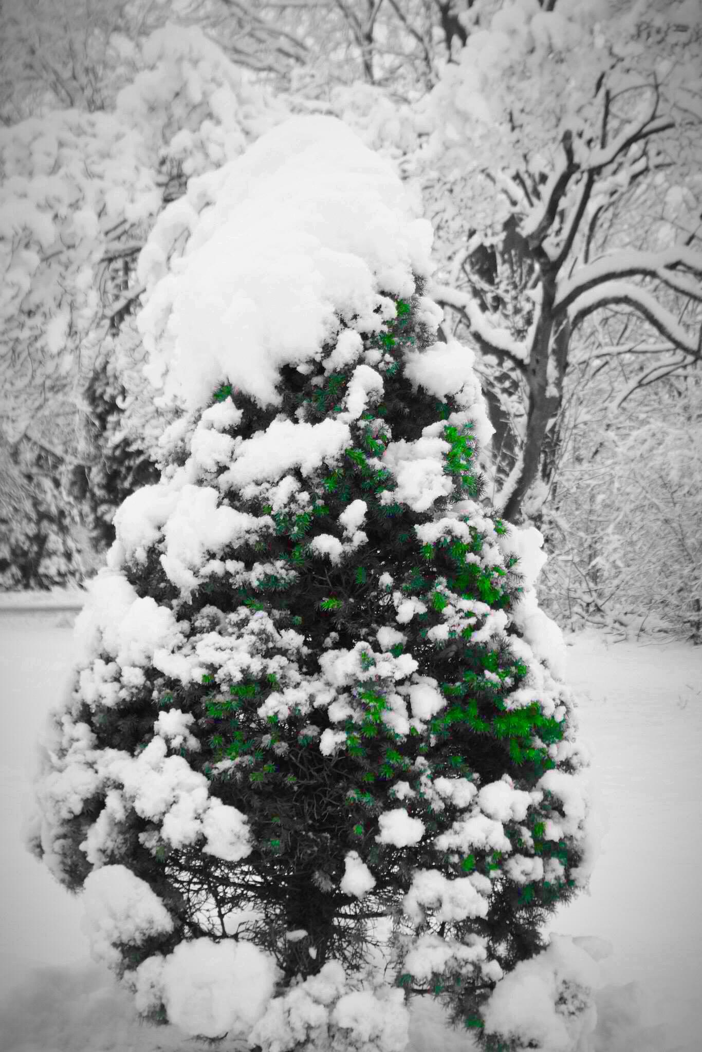 The hidden Christmas tree. by BarryBihrlePhotography