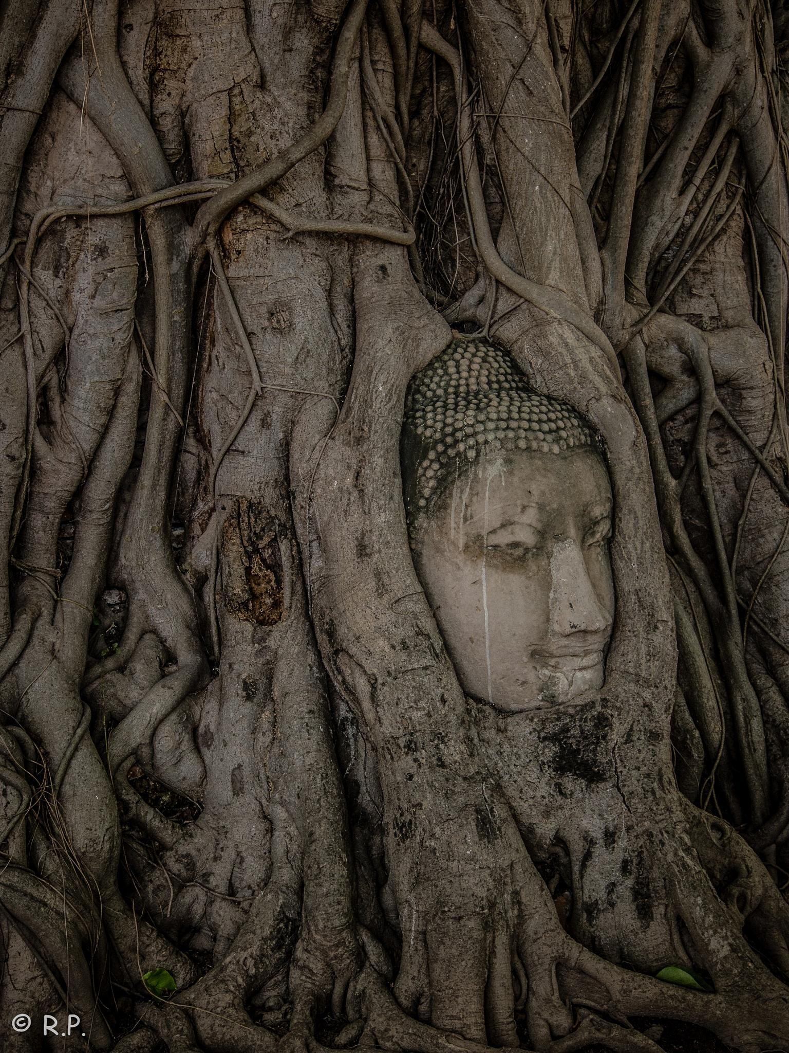 Buddha in a tree by Riccardo Piccolo