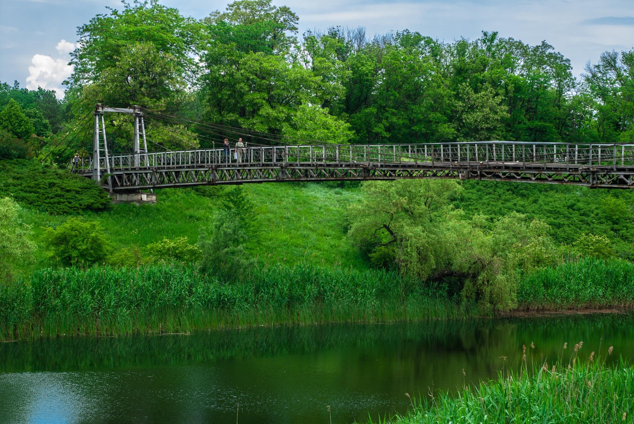 Bridge by Alexey Pisanets