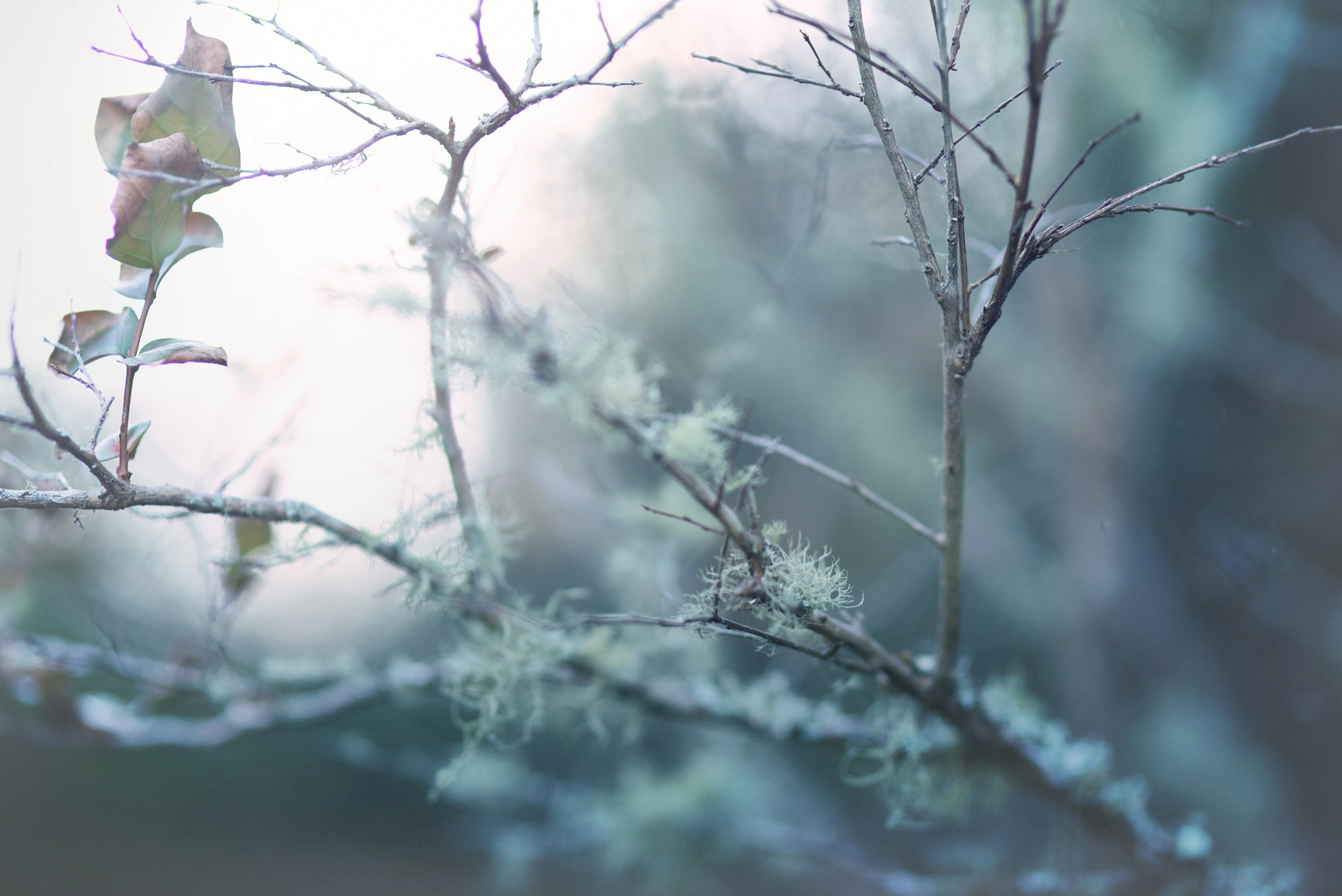 Winter's coming by Nikki Roloff