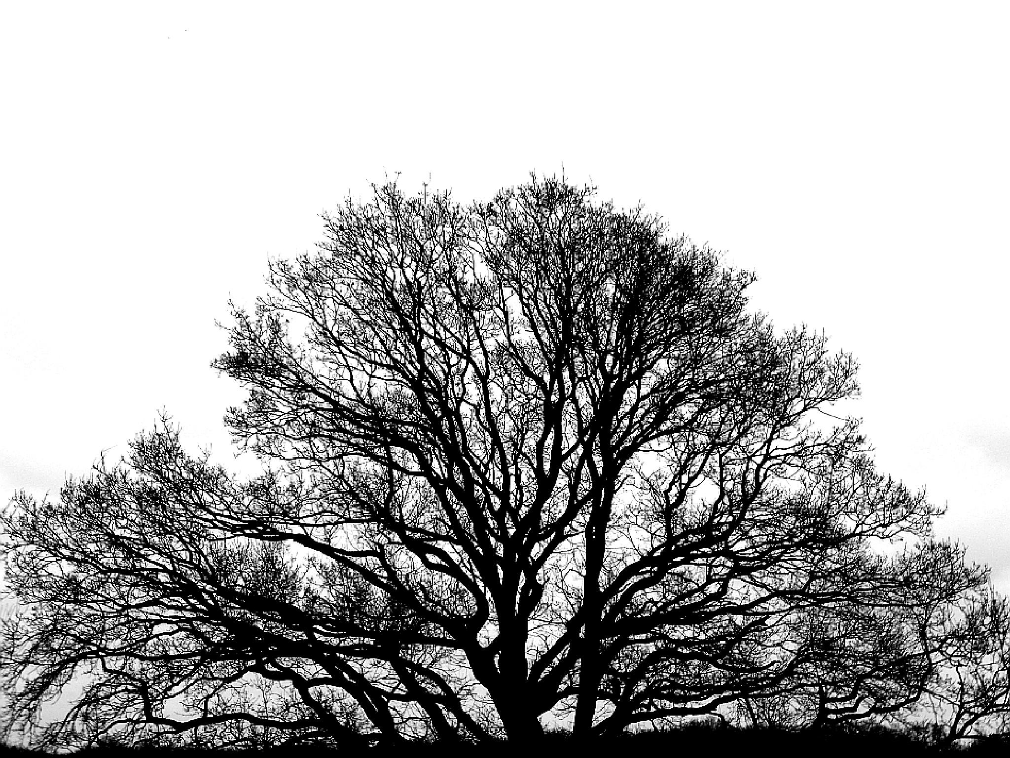 Tree by Gernot Schwarz