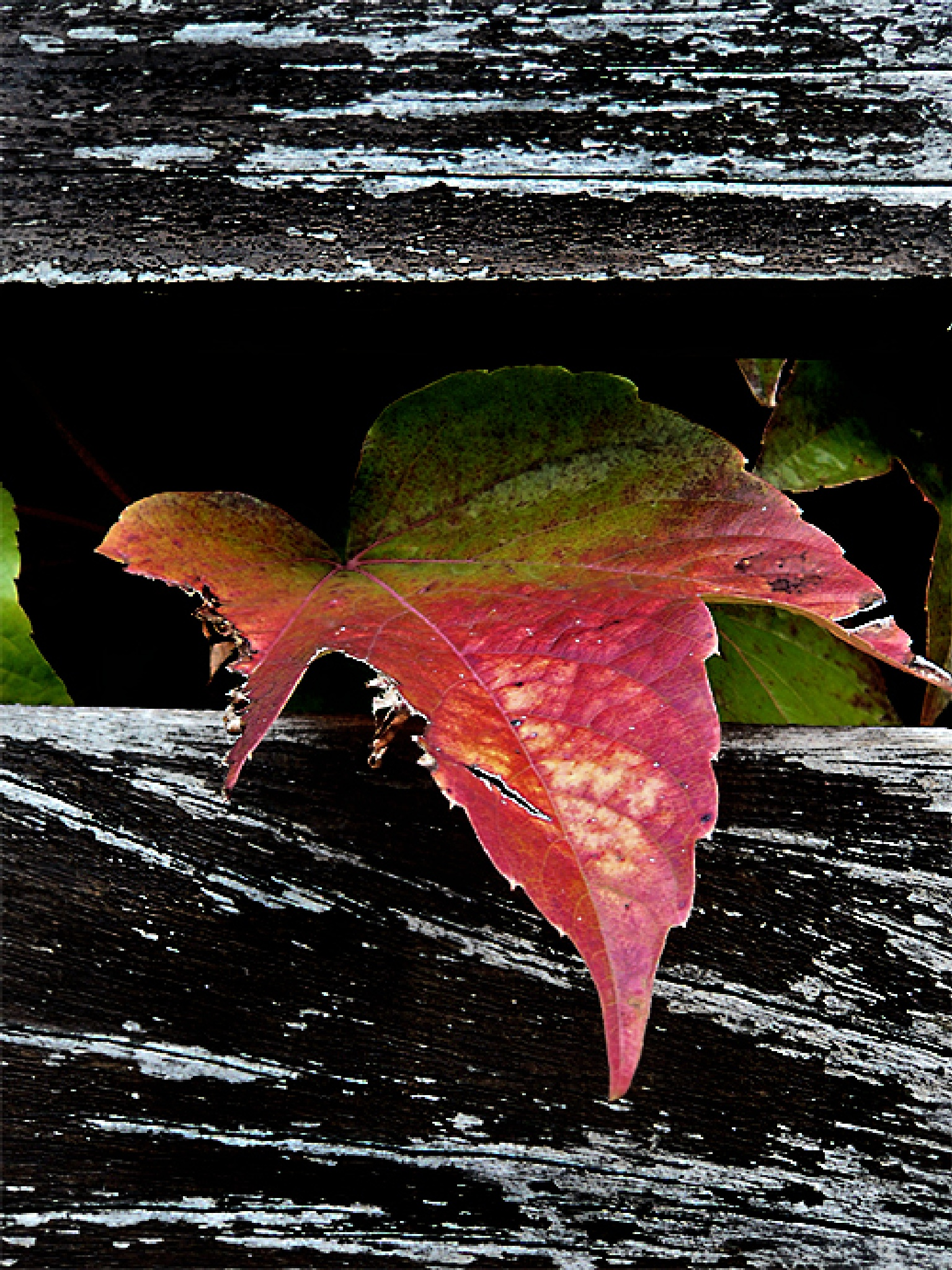 Autumn #9u by Gernot Schwarz