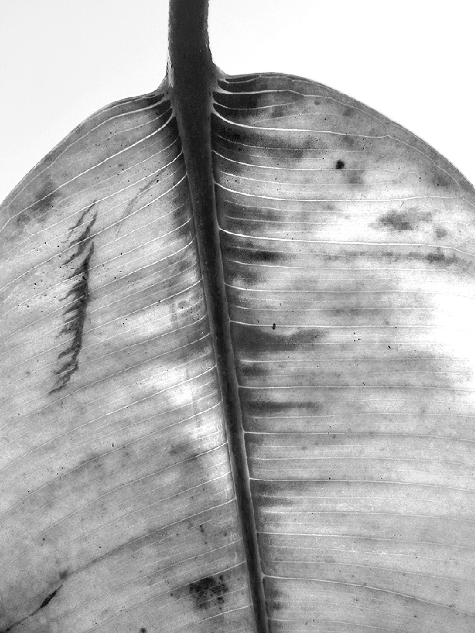 Leaf by Gernot Schwarz