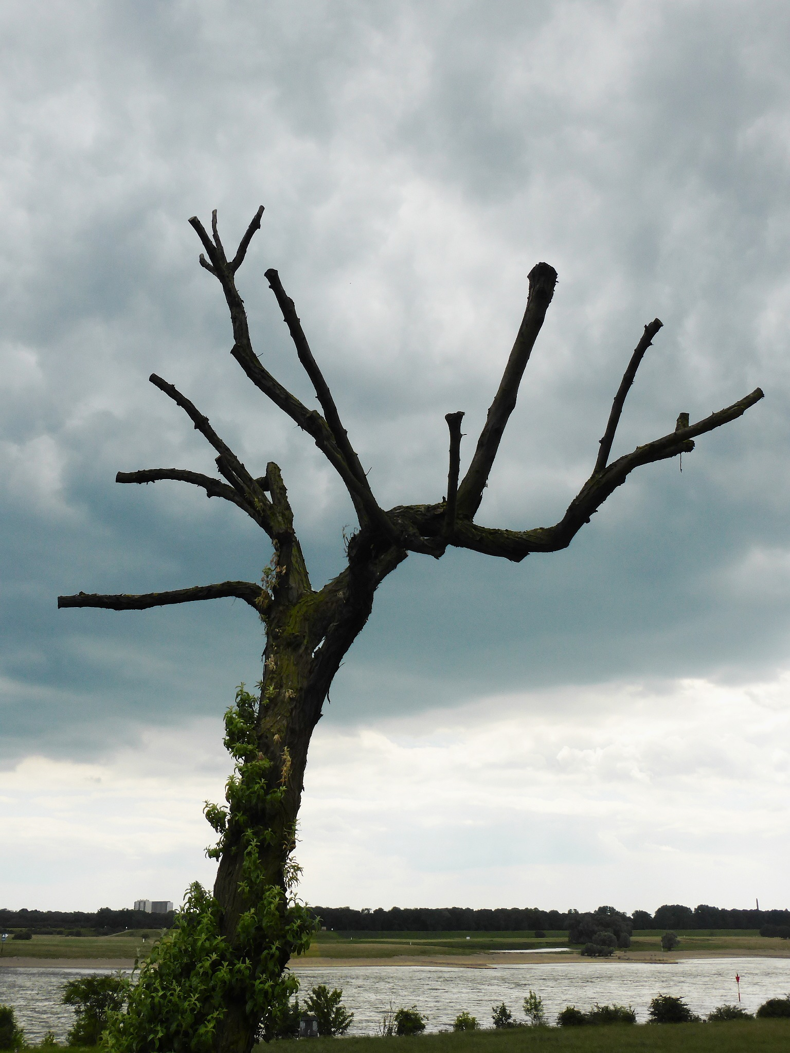 Old tree by Gernot Schwarz