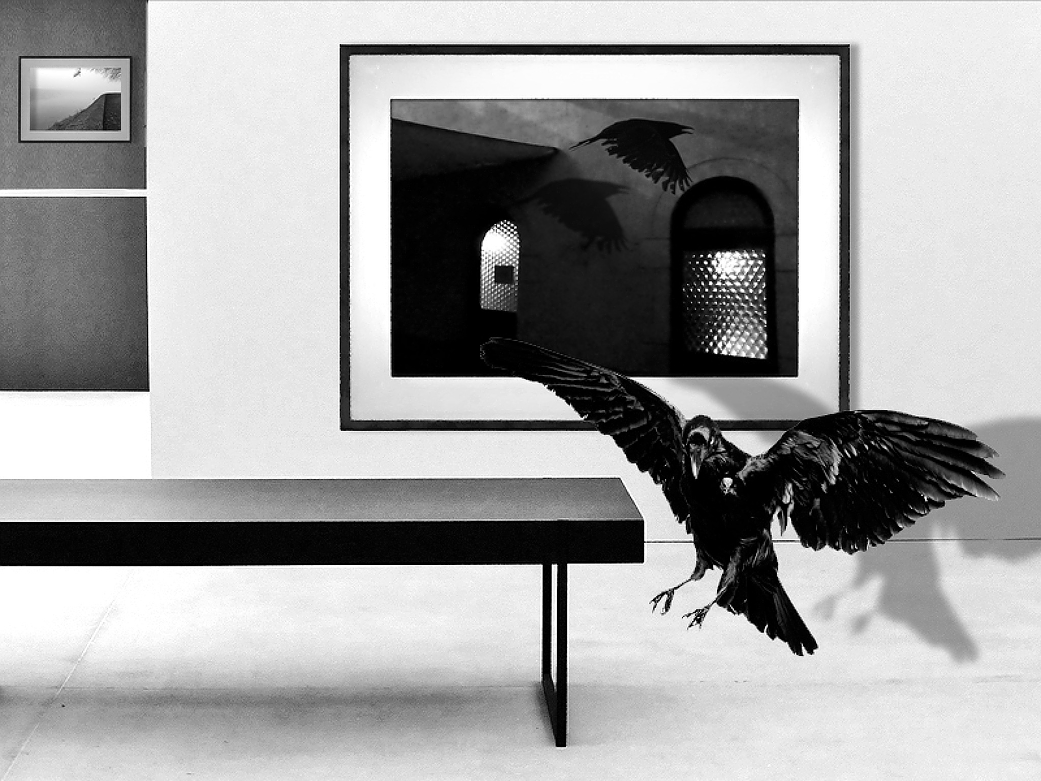 Crows by Gernot Schwarz