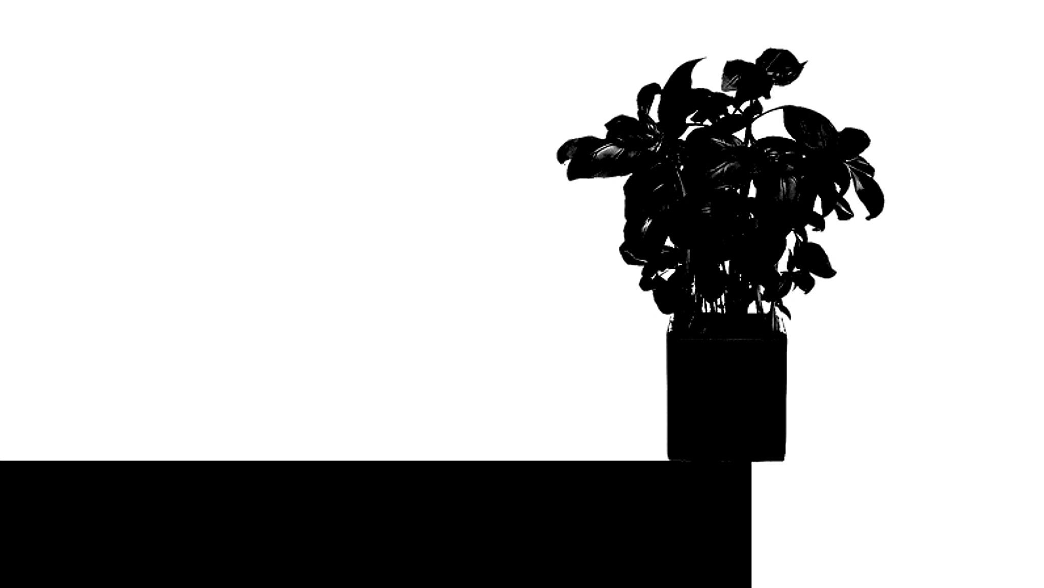 Plant by Gernot Schwarz