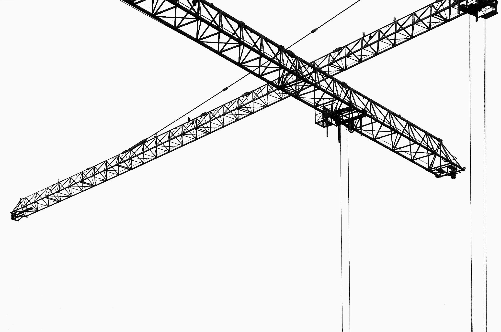 Cranes by Gernot Schwarz
