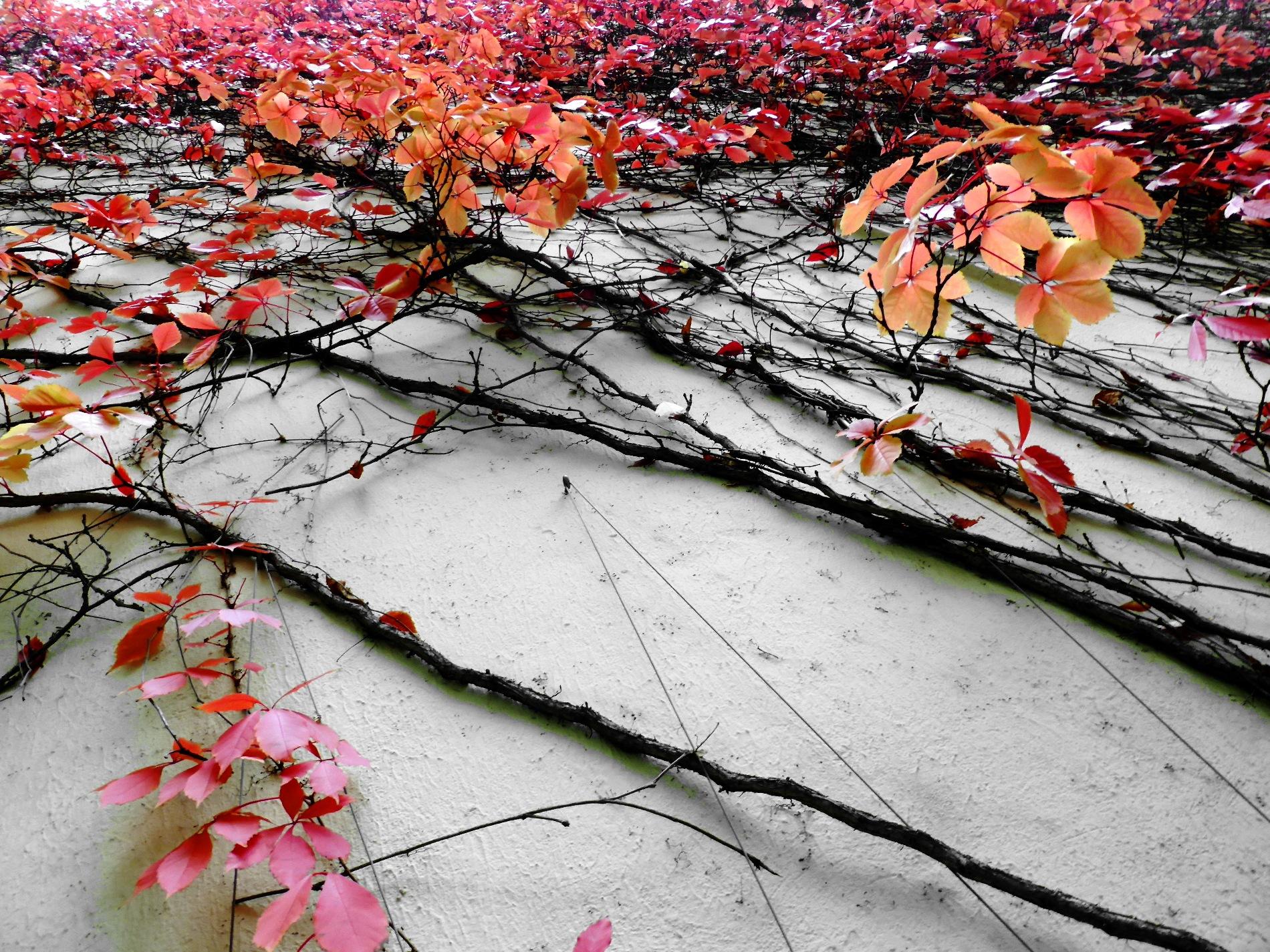 Autumn by Gernot Schwarz