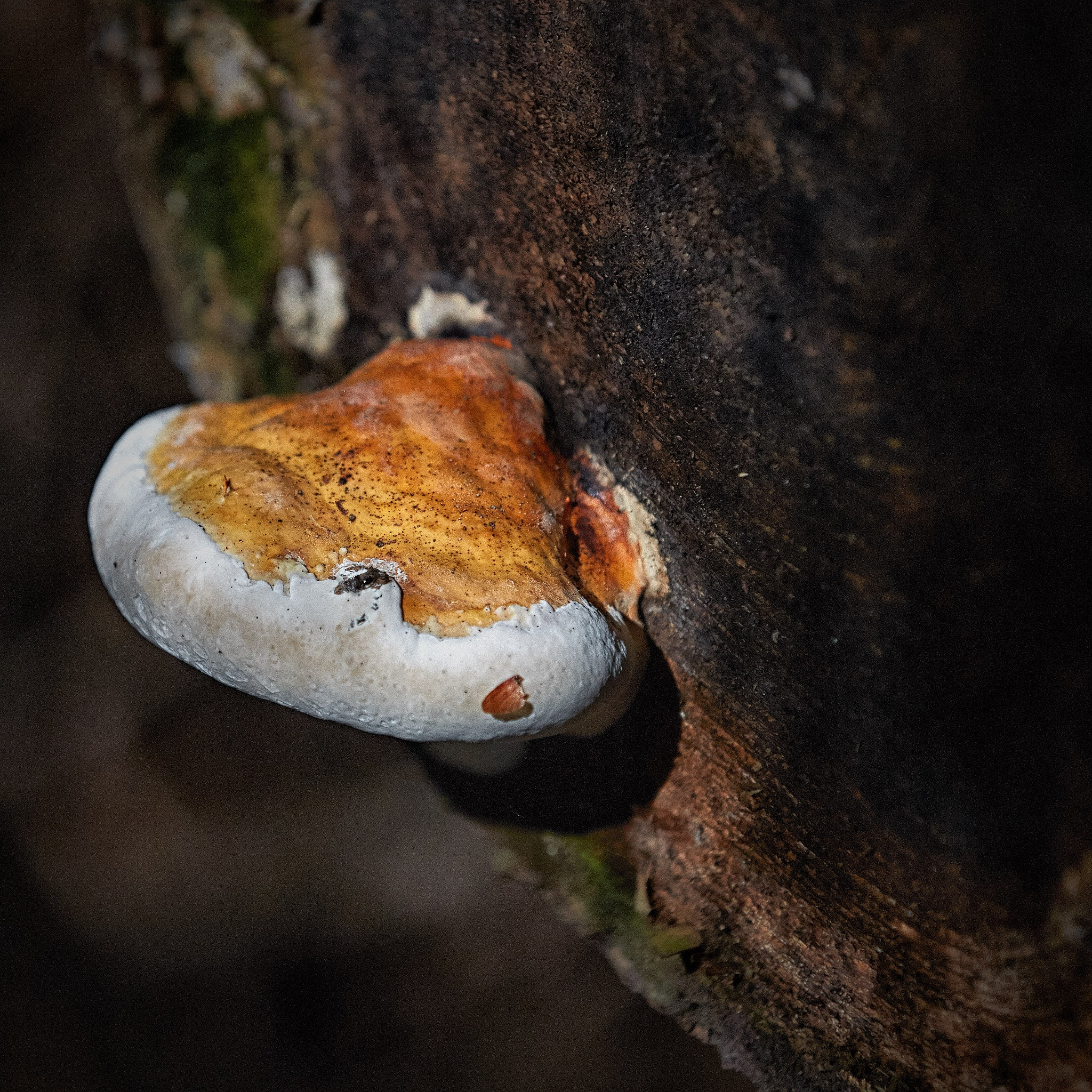 Forest fungus #1 by Greg Mullaly