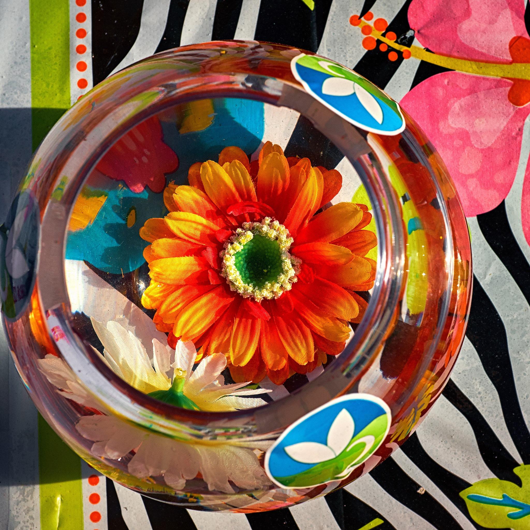 Flower in water by Greg Mullaly